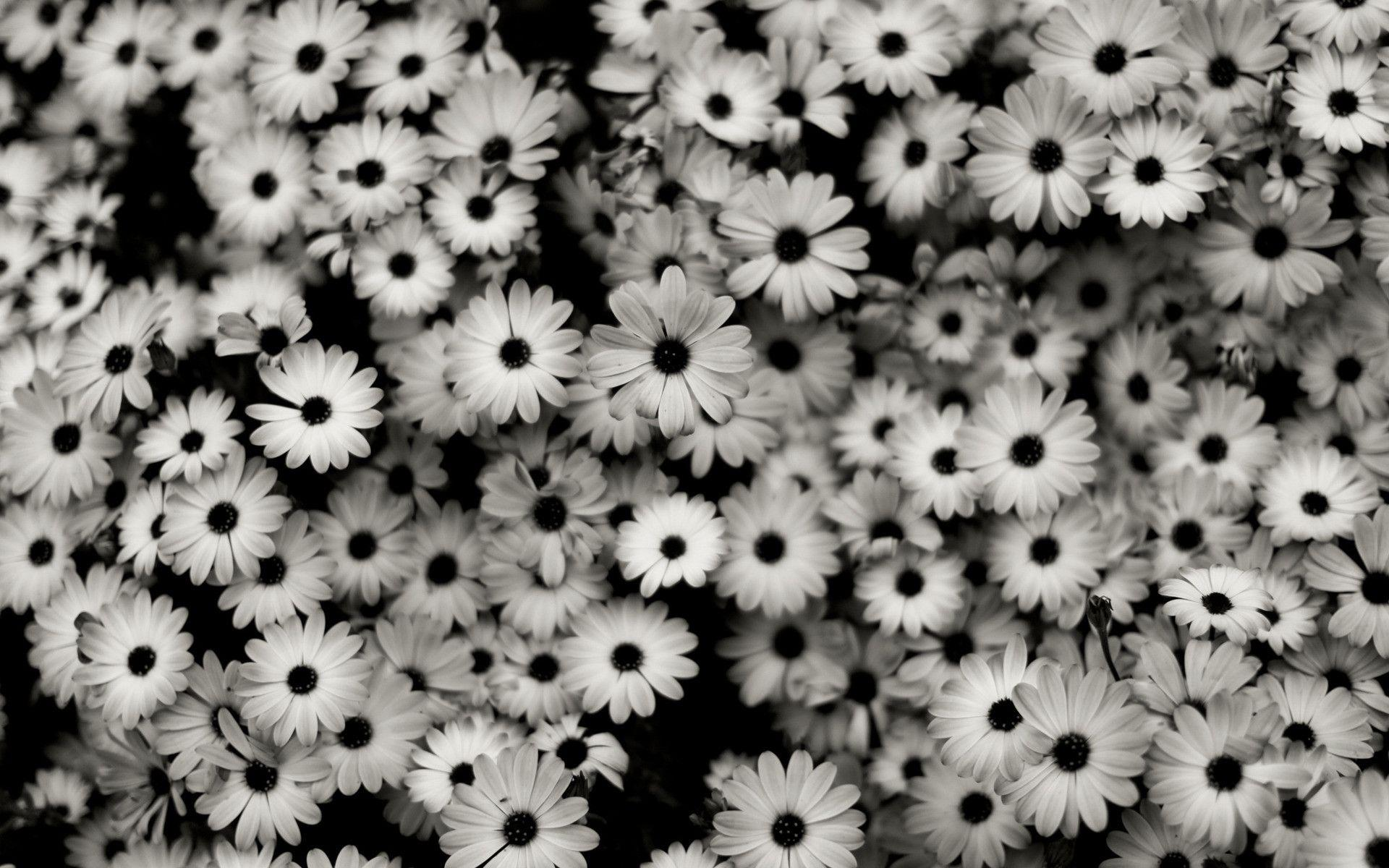 Pretty black and white backgrounds ·①