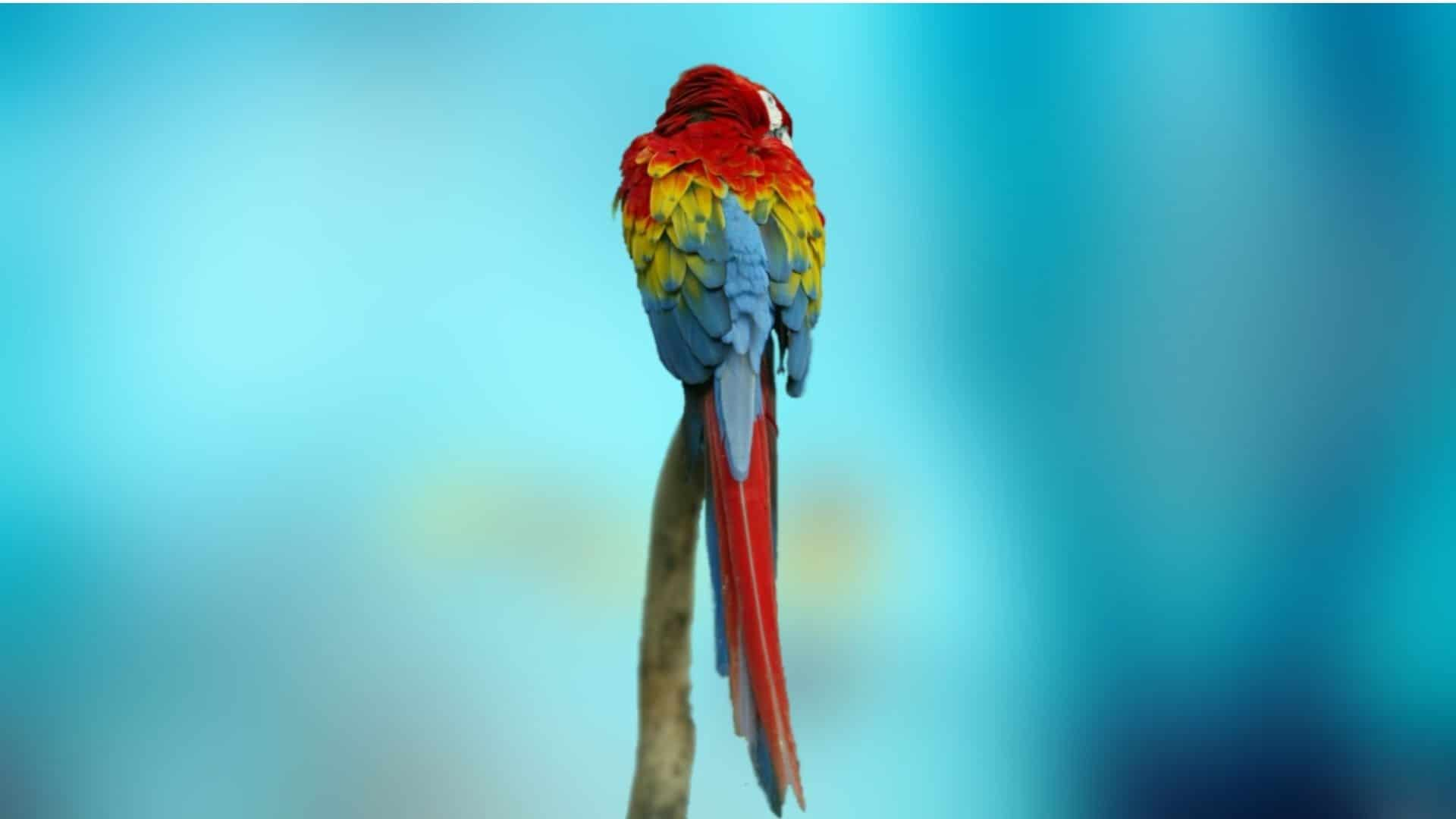 Parrot Os Wallpapers