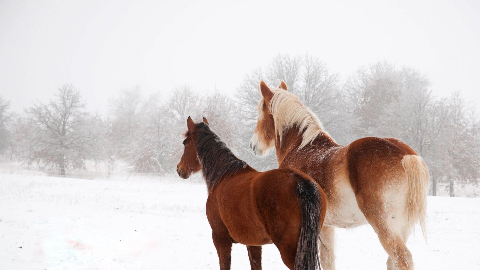 Horses In The Snow Wallpapers Wallpaper Cave