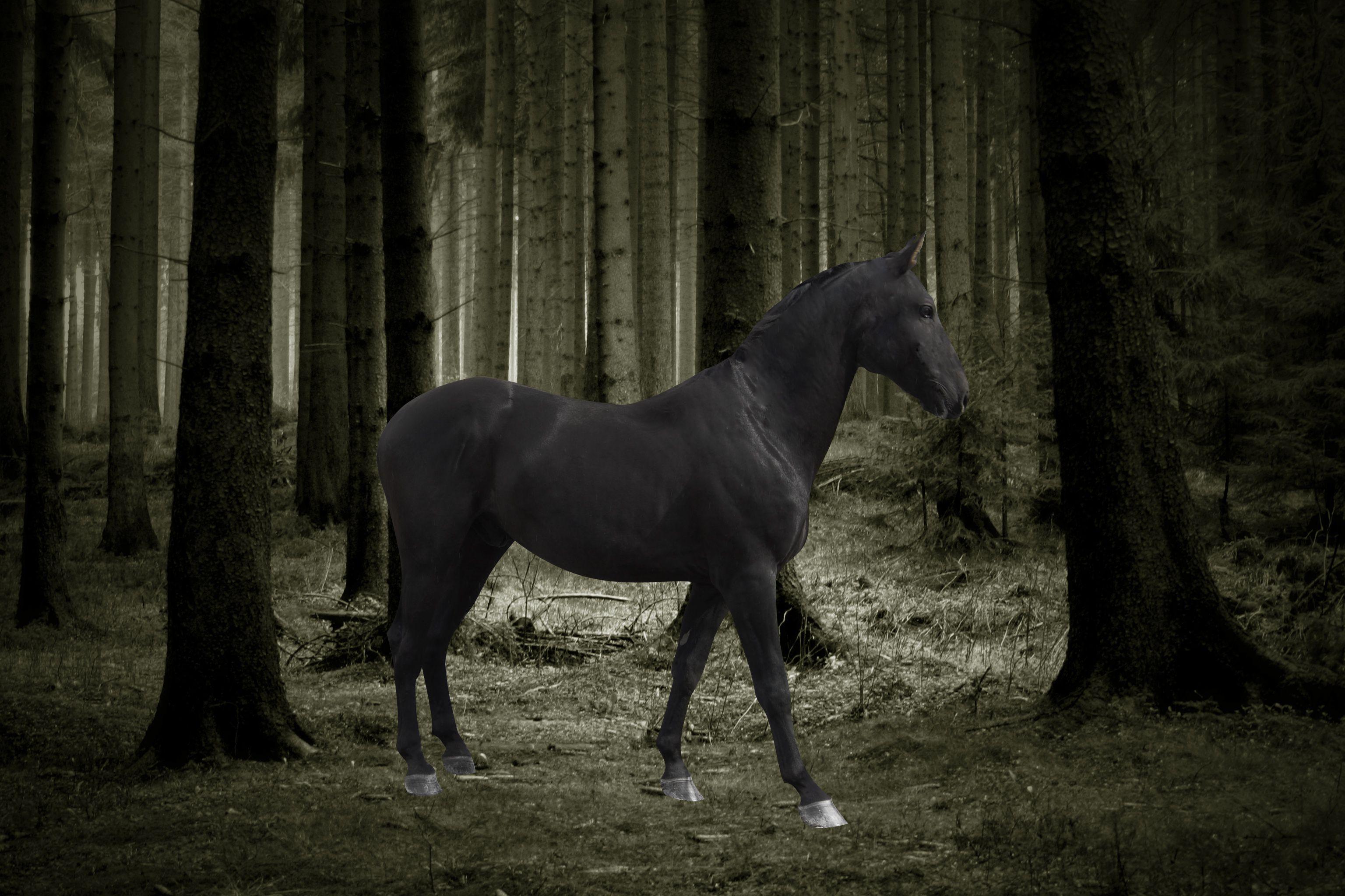 Black Horses Wallpapers Wallpaper Cave