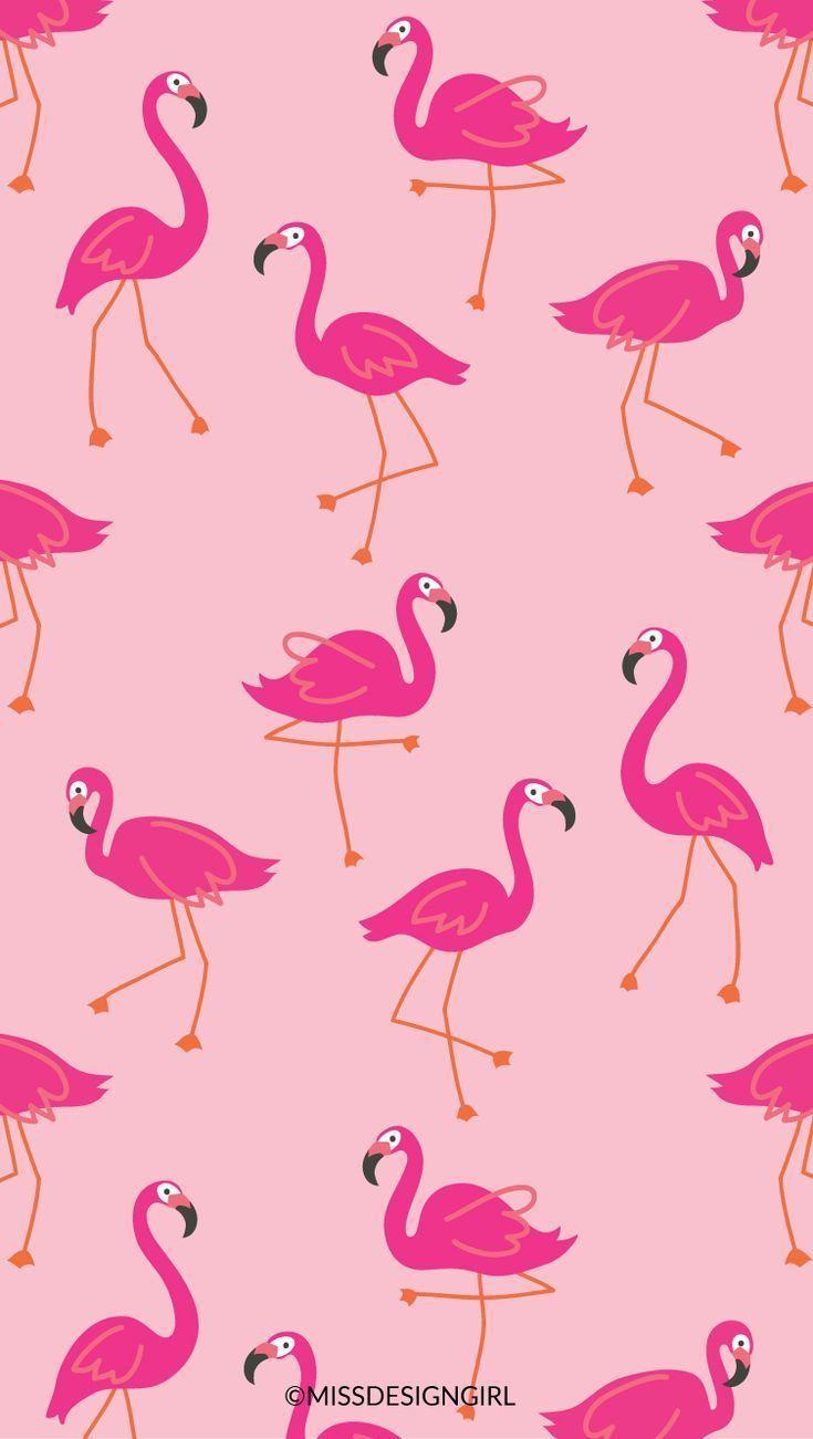 Flamingo Pink Wallpapers Wallpaper Cave