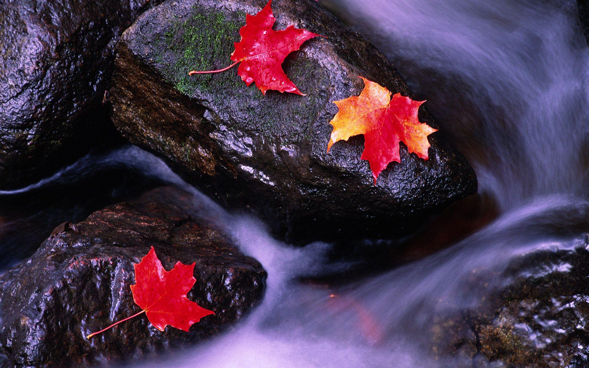 Rivers of Canada wallpapers and image