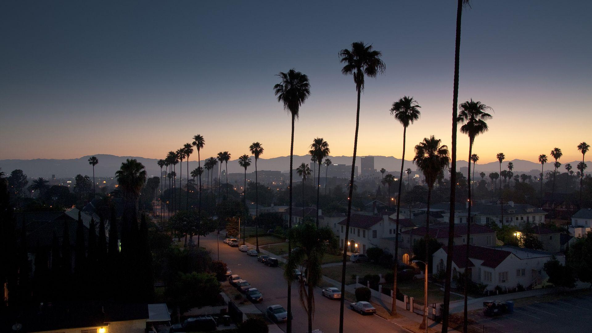 Palm Tree Night View California Wallpapers
