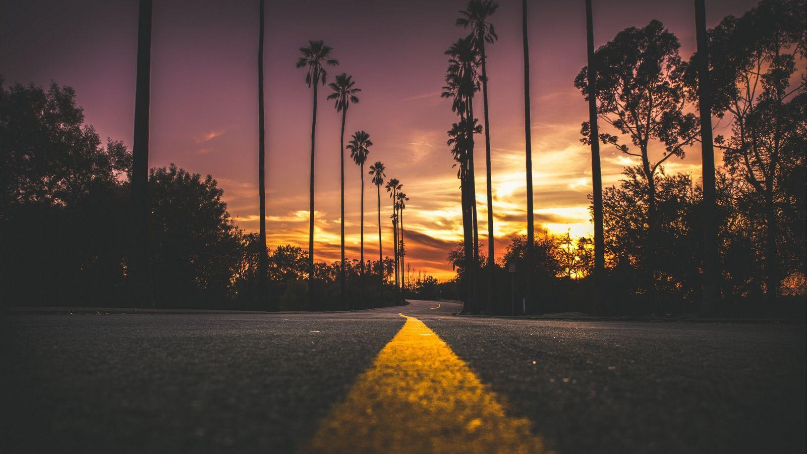 Download wallpapers 1600x900 palms, road, marking, trees, sky