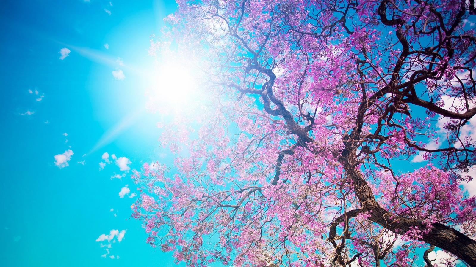 Spring Blossom Sunshine Wallpapers In 1600X900