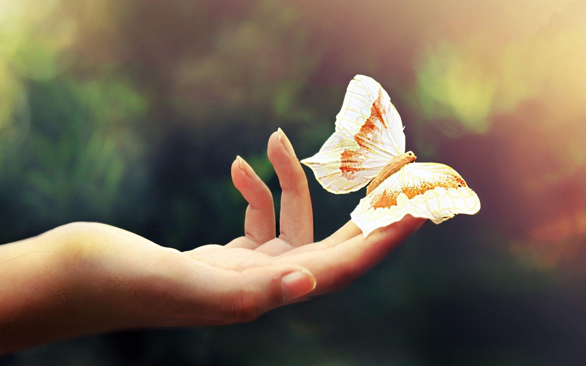 تفسير الفراشه في الحلم