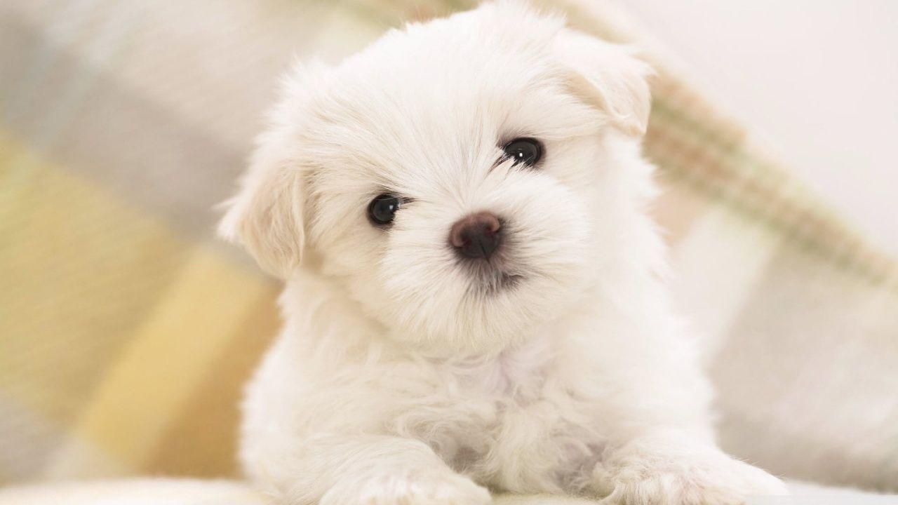 Fluffy Dogs Wallpapers Wallpaper Cave