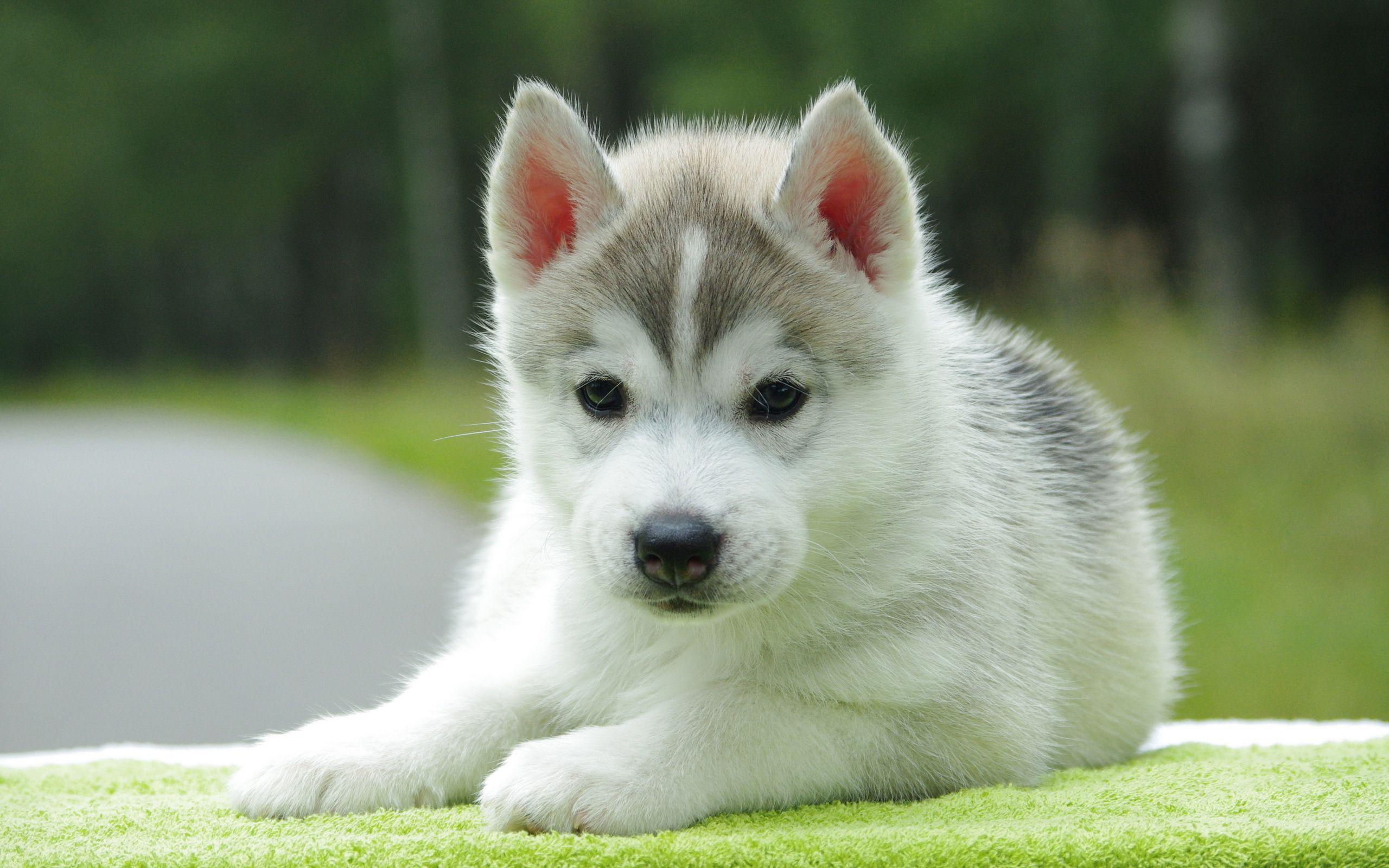 Adorable Puppy Wallpapers Wallpaper Cave