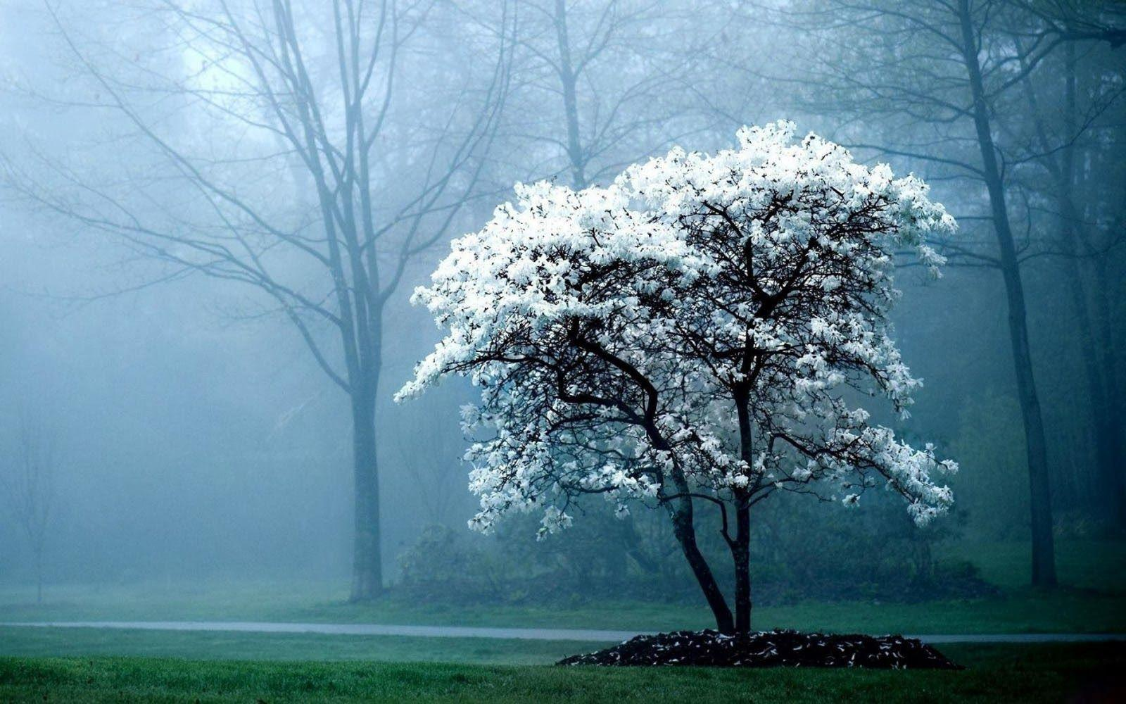 Early Morning Fog Wallpapers