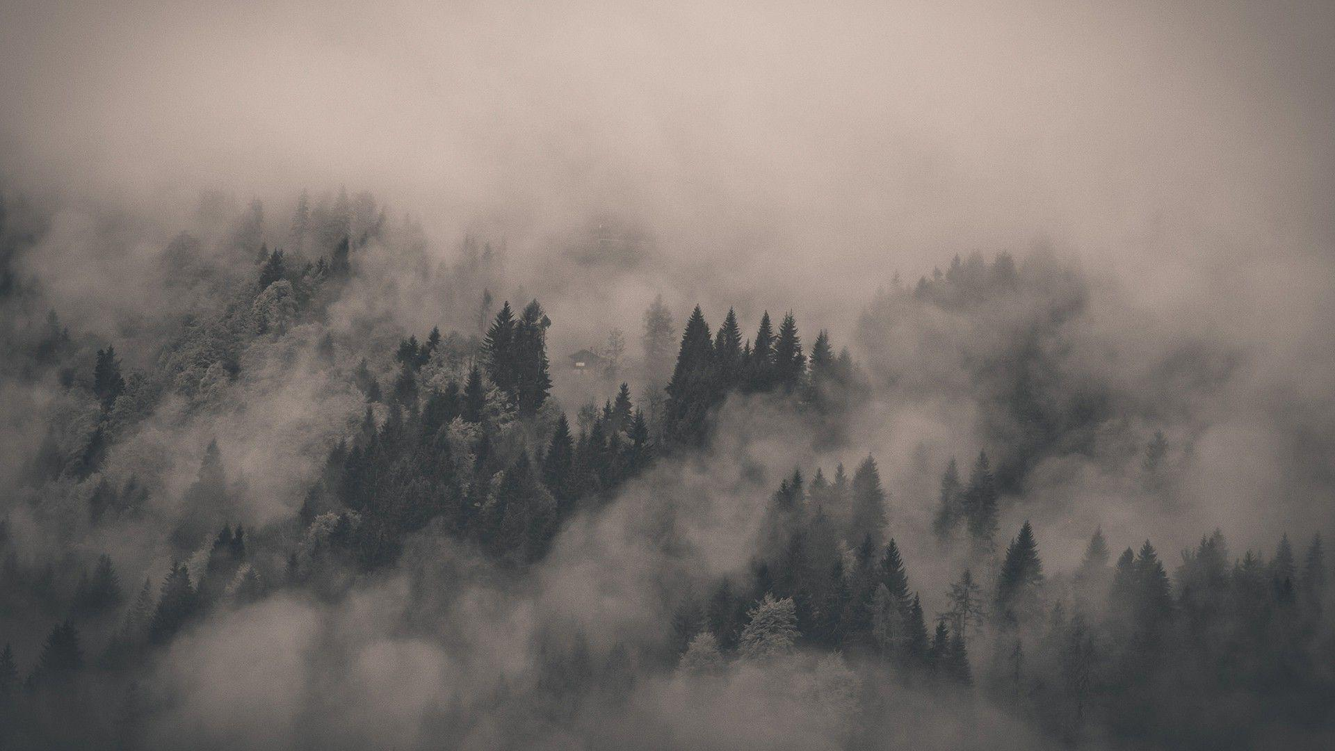 Fog Wallpapers