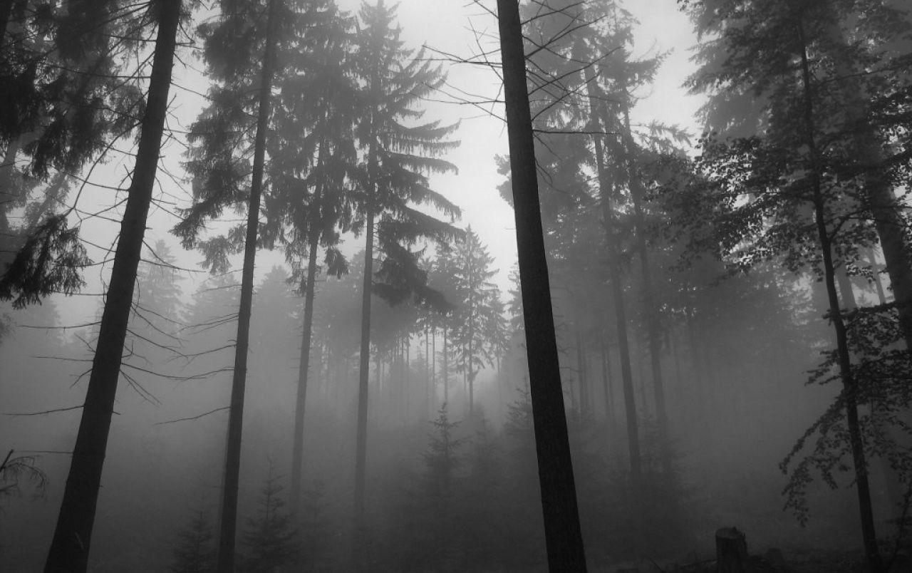 Forest Fog wallpapers