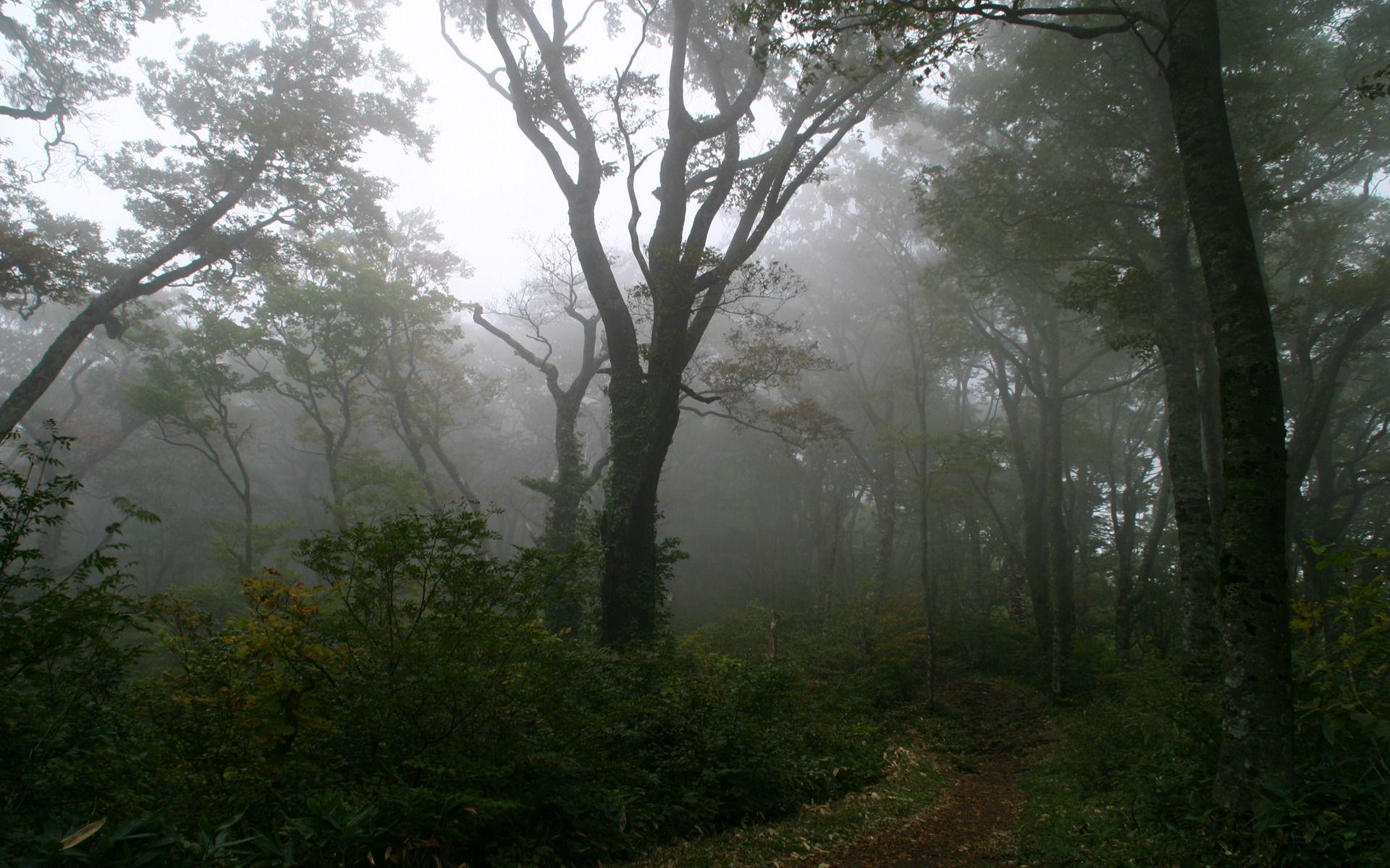Forest Fog Wallpapers 5