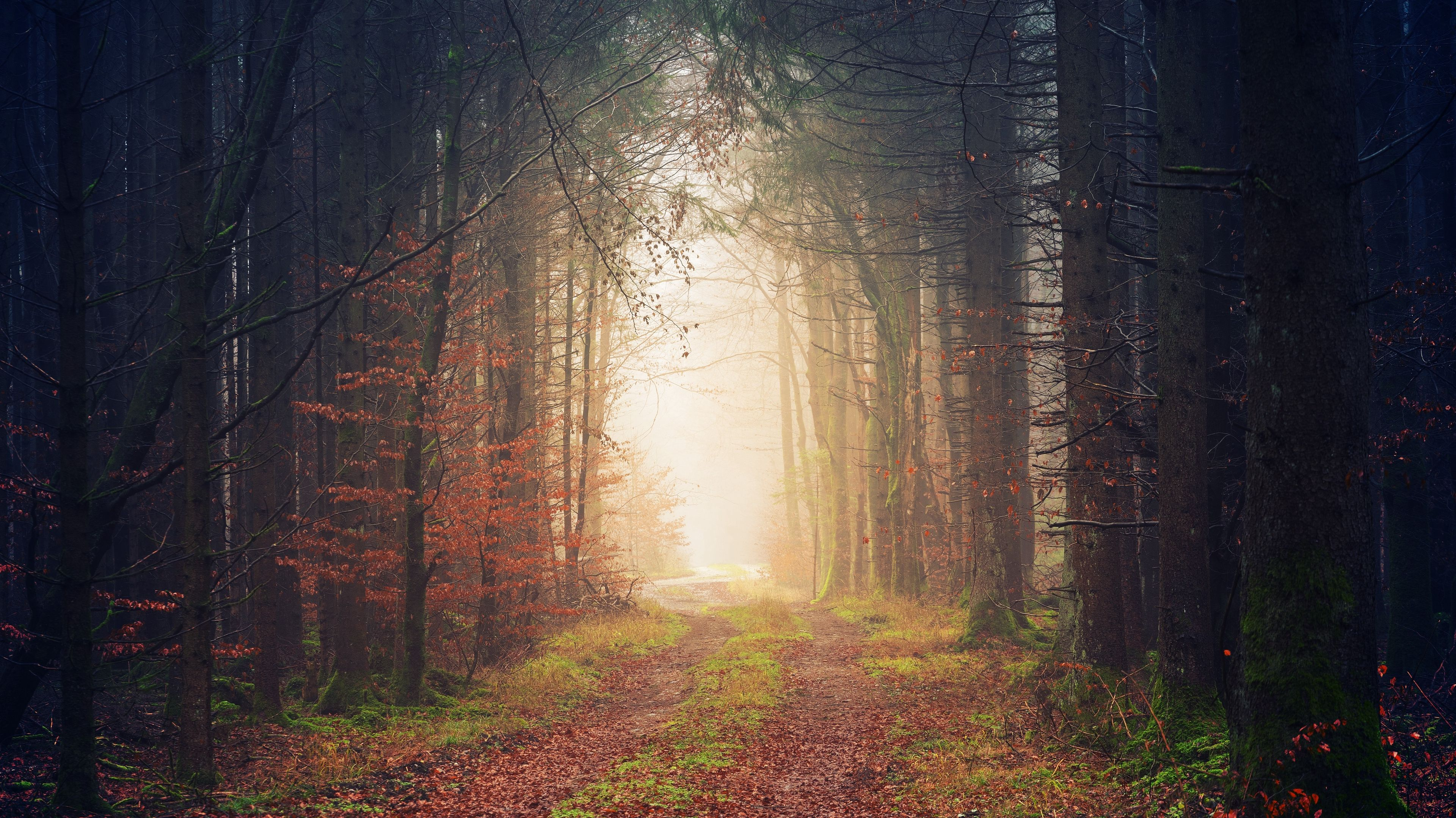 Download wallpapers 3840x2160 autumn, trees, fog, path, foliage 4k