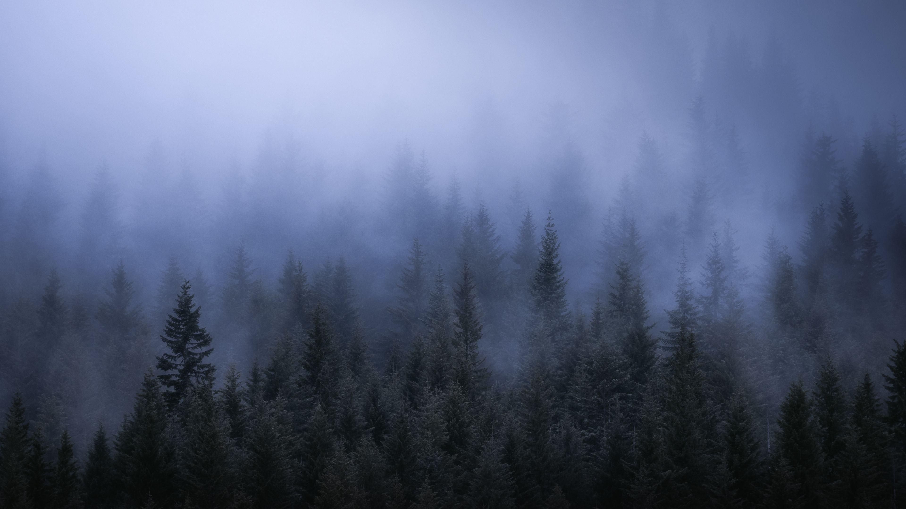 Wallpapers 4k Fog Dark Forest Tress Landscape 5k 4k