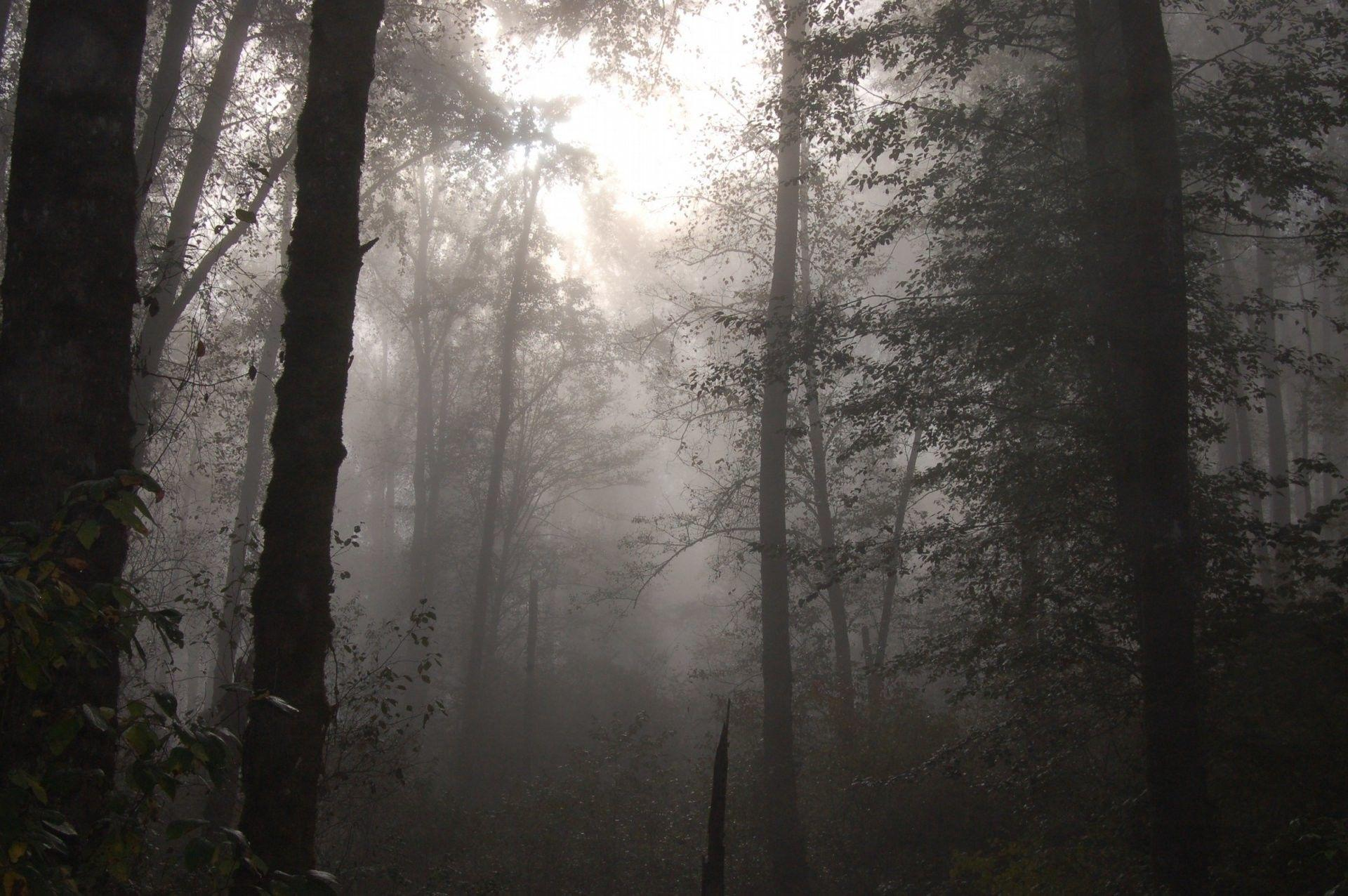 Foggy Forest Wallpapers