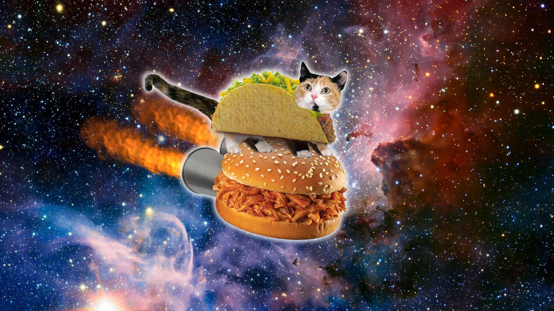 Space Kittens Desktop Wallpapers ...