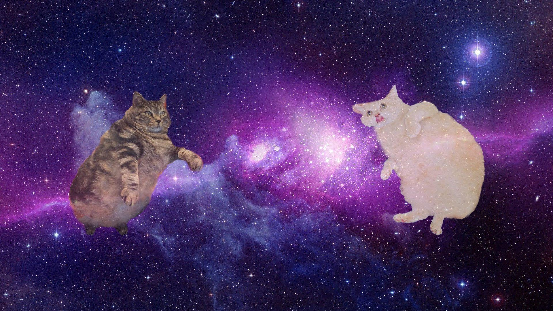Kitten In Space Wallpapers Wallpaper Cave