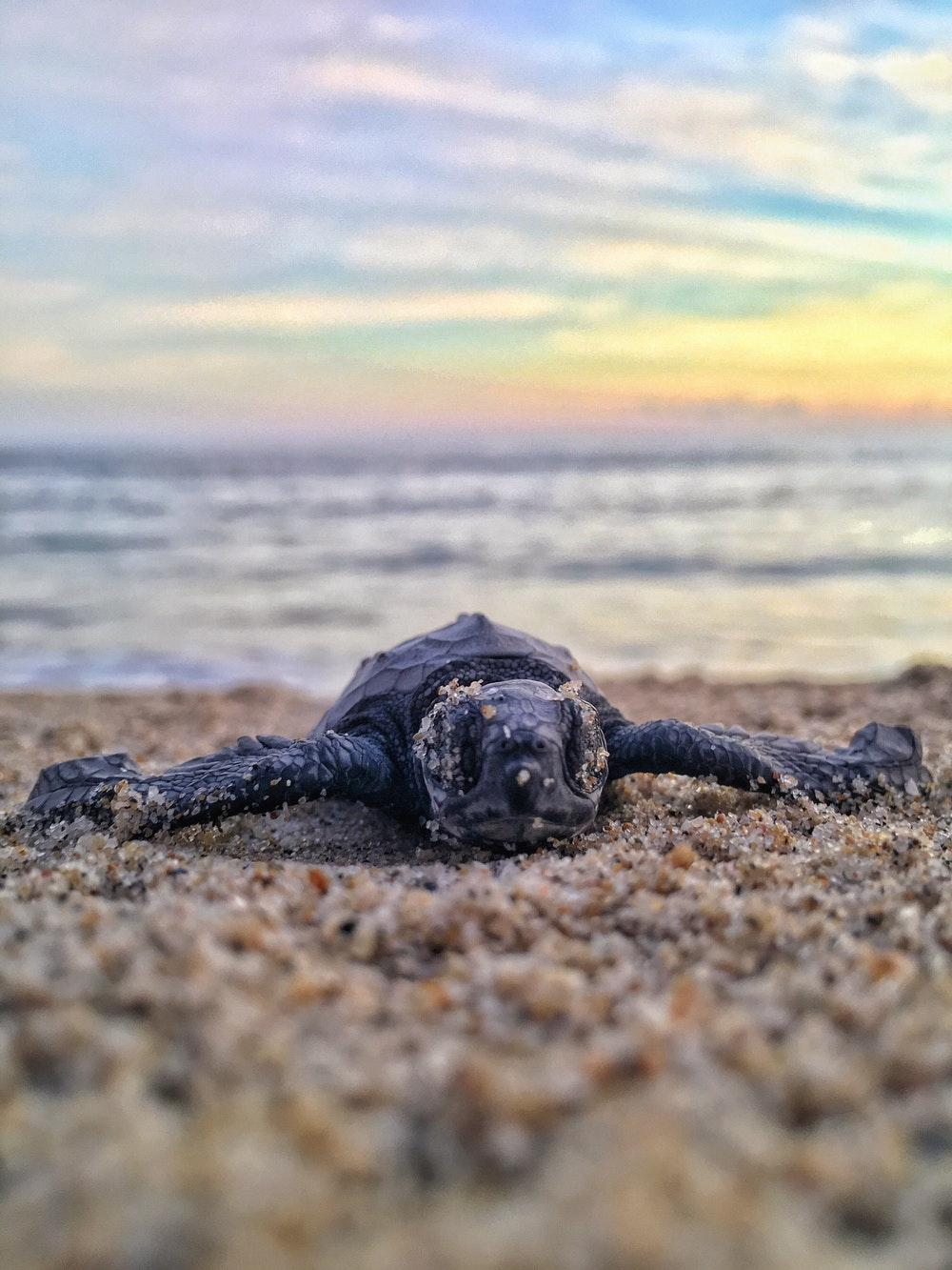100+ Sea Turtle Pictures | Download Free Images on Unsplash