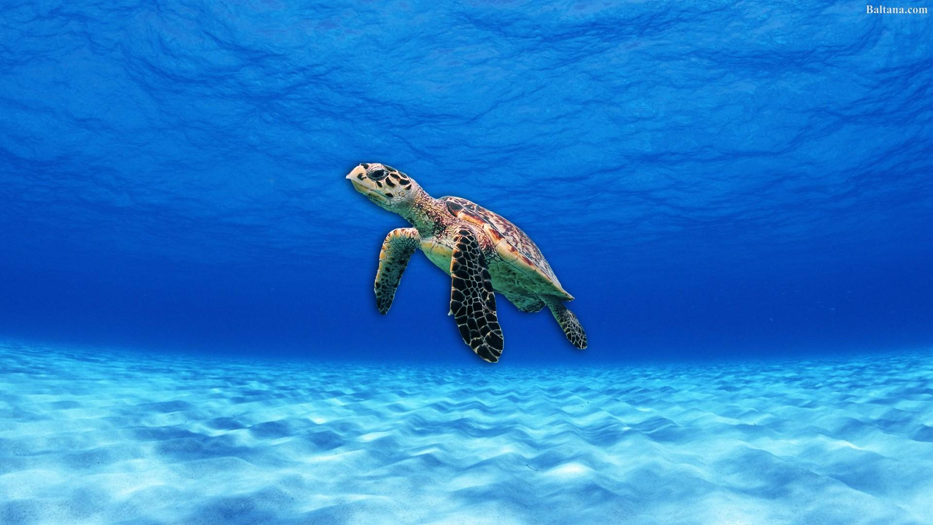 Sea Turtle Wallpapers - Wallpaper Cave