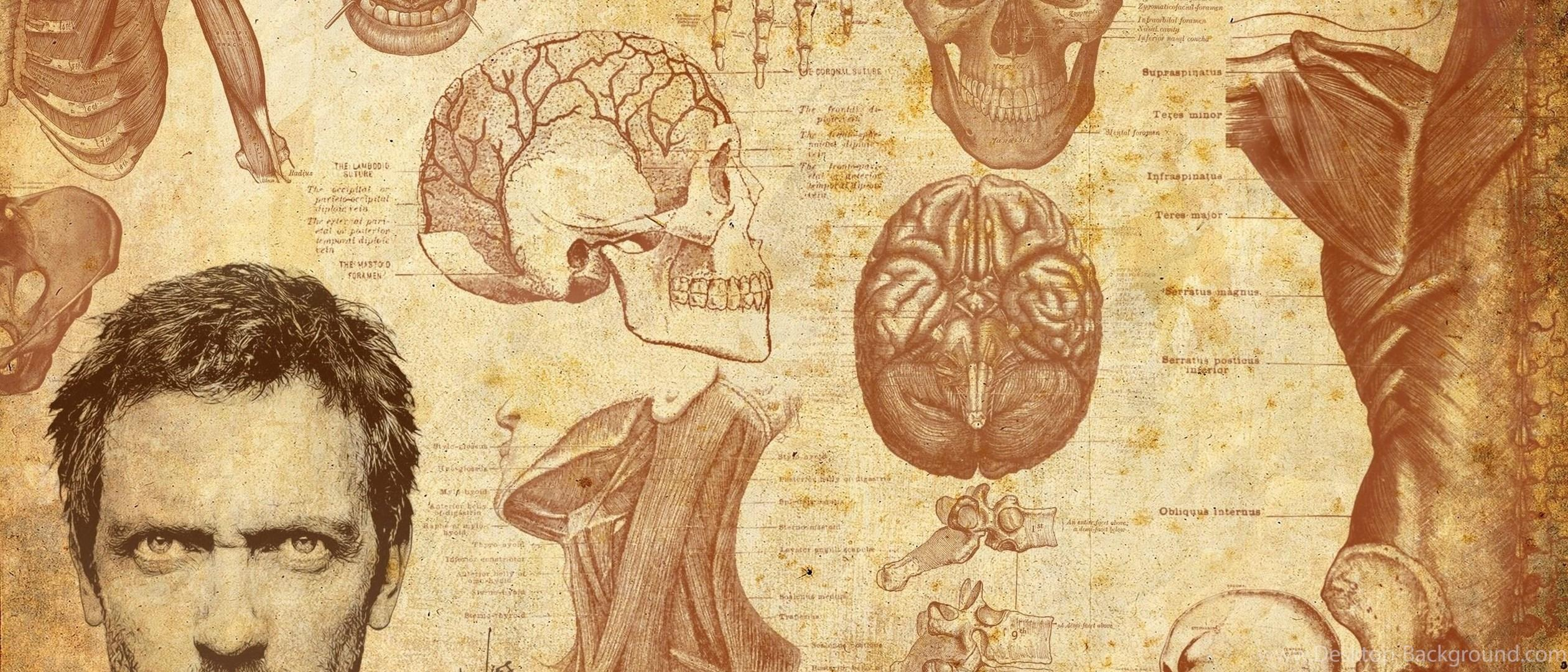 Anatomy Wallpapers - Wallpaper Cave