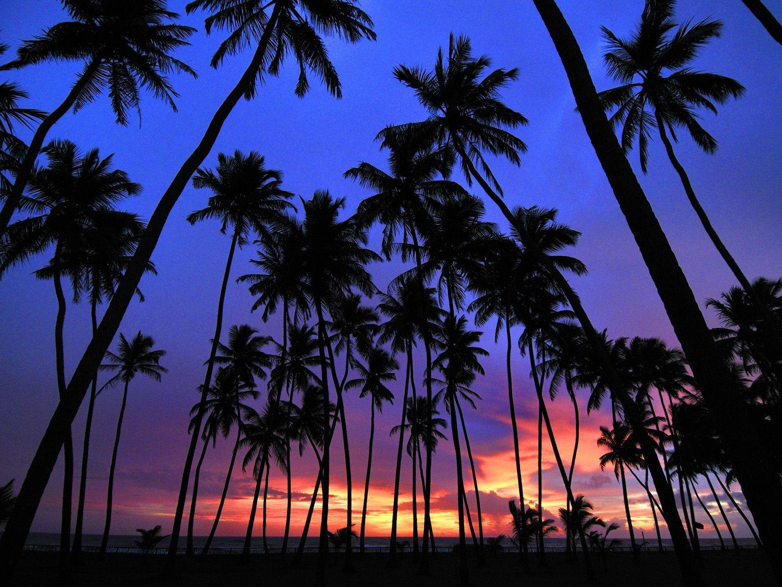 Free Palm Tree Wallpapers