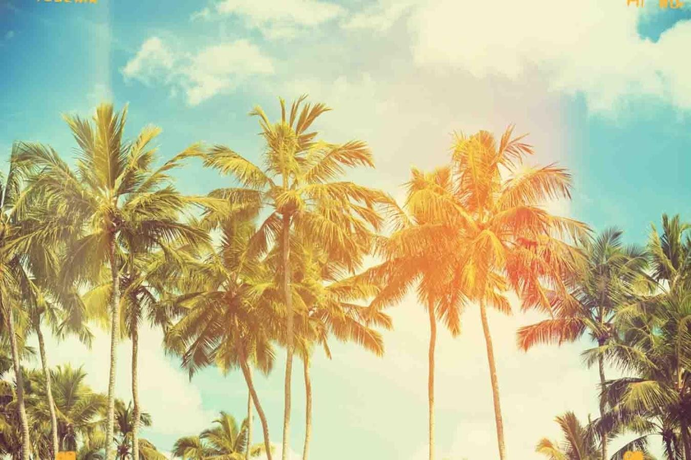 Palm Tree Wallpapers 13
