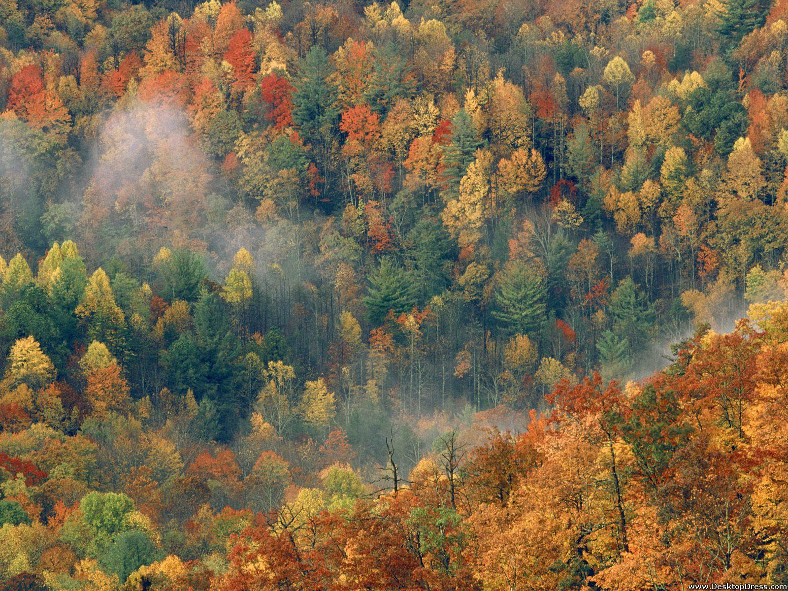 Desktop Wallpapers » Natural Backgrounds » Colorful Autumn Forest