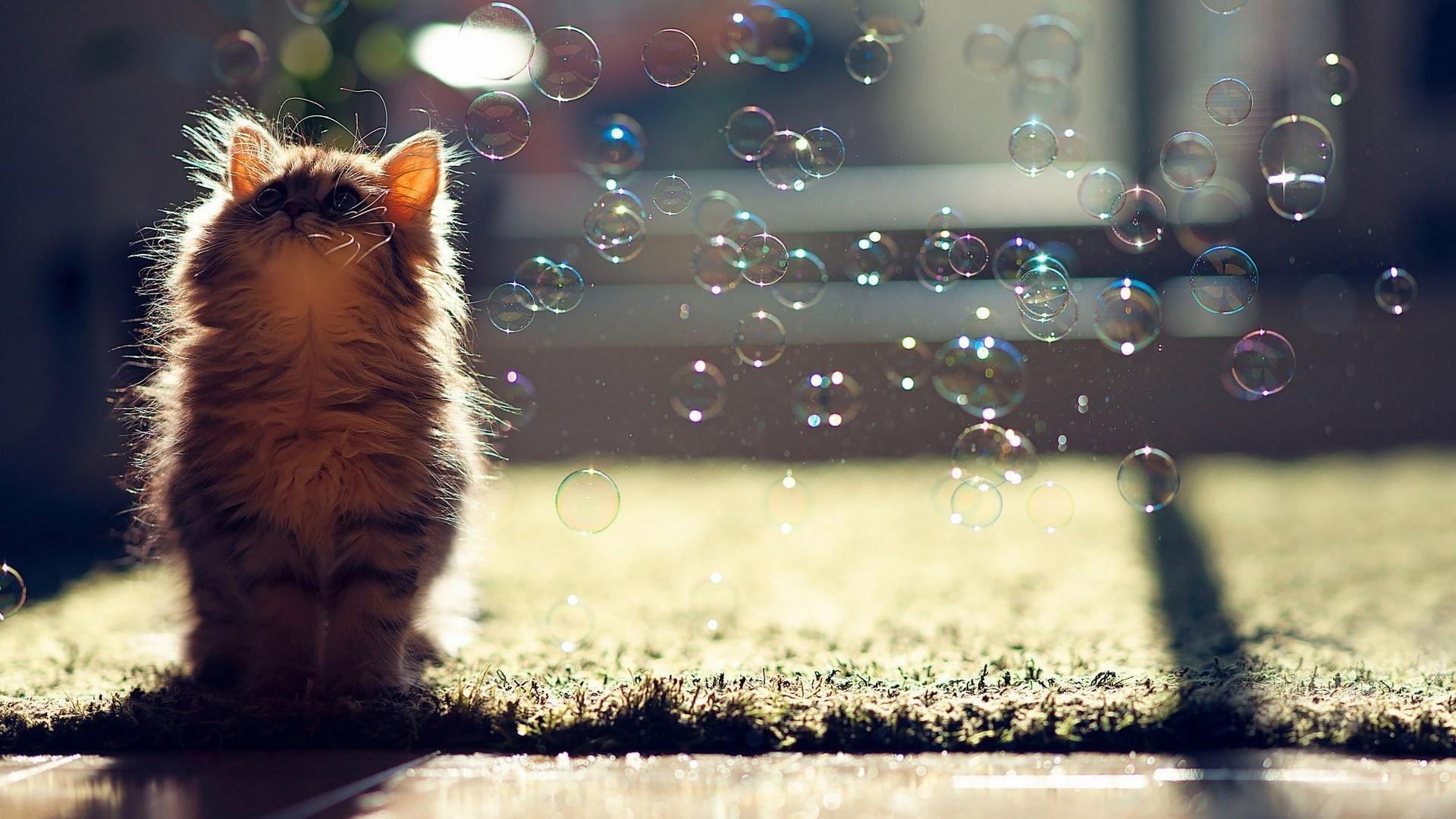 Fluffy Cats Wallpapers Wallpaper Cave