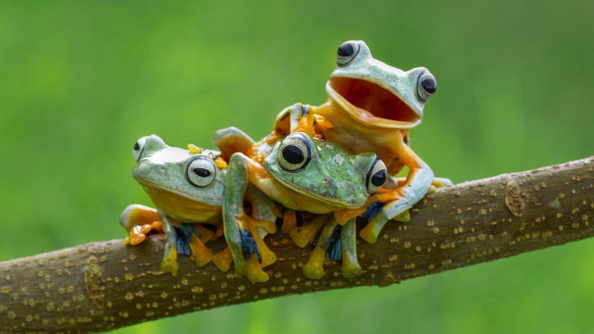 Frogs Wallpapers - Wallpaper Cave
