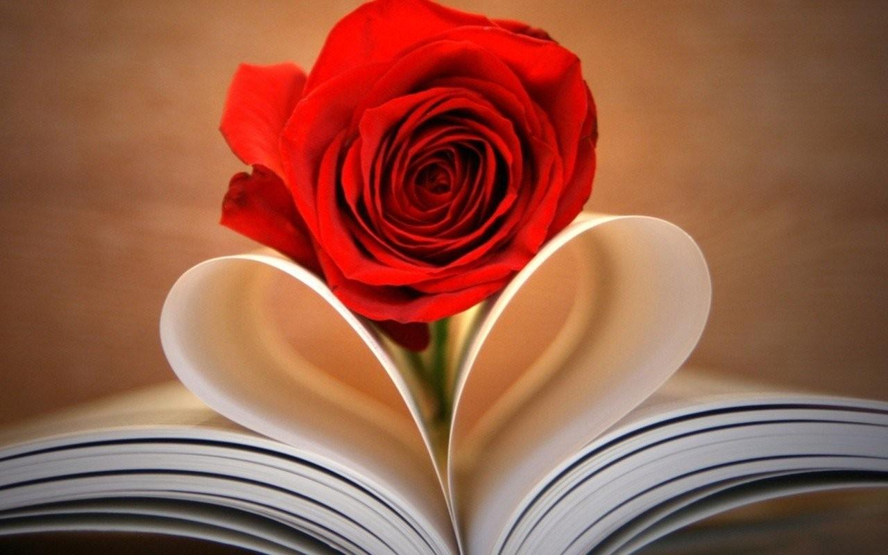 Love Rose Wallpapers - Wallpaper Cave