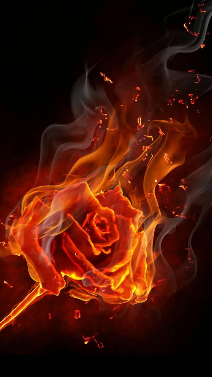 Red Rose On Fire Wallpaper