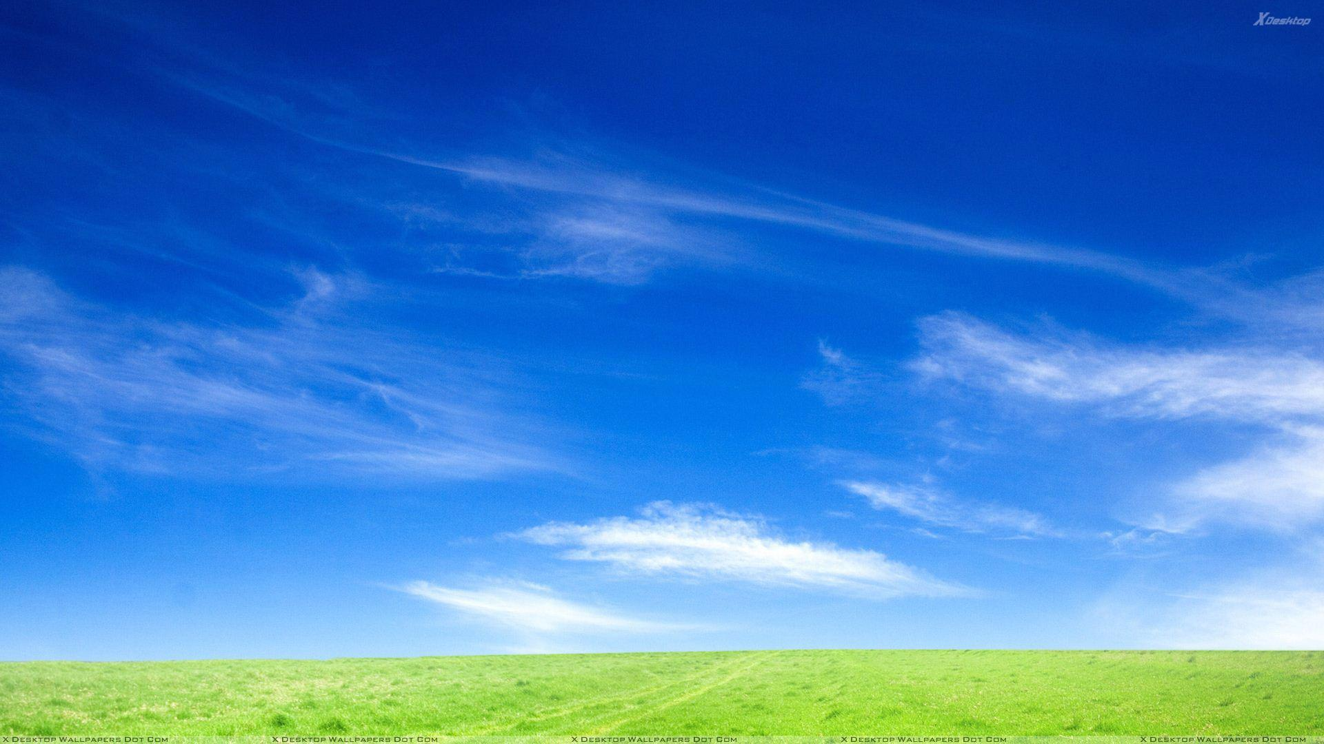 Blue Sky And Green Grass Morning Scene Wallpapers