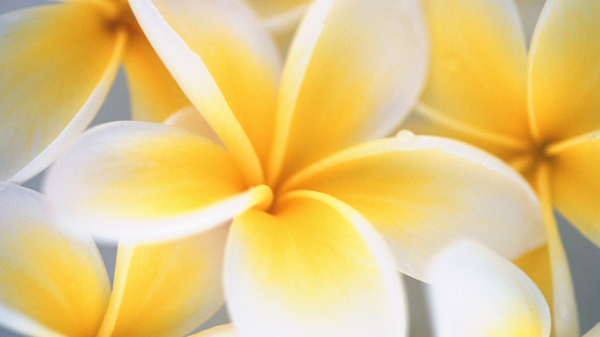 yellow flower hd wallpapers wallpaper cave yellow flower hd wallpapers wallpaper
