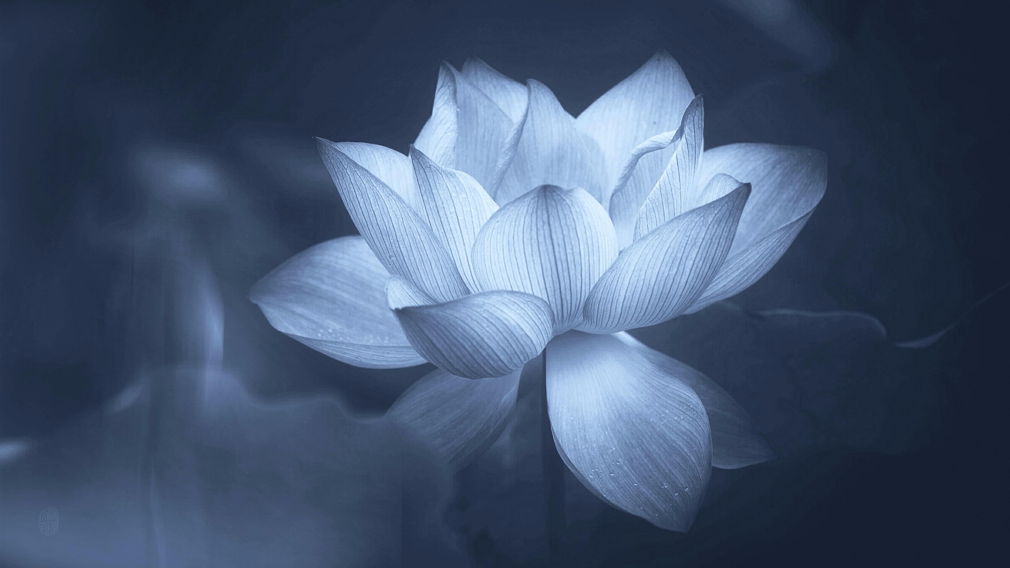 Get Here Lotus Flower Black And White Wallpaper - 3d wallpaper