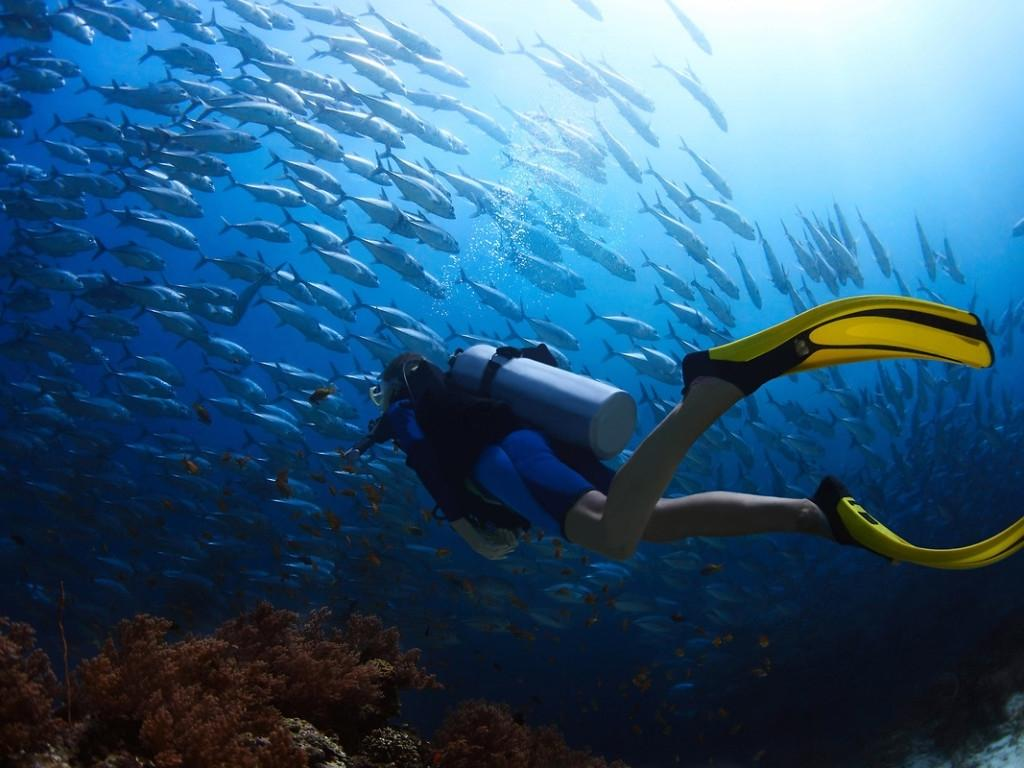 10 Best Scuba Diving Wallpapers High Resolution FULL HD 1080p For PC