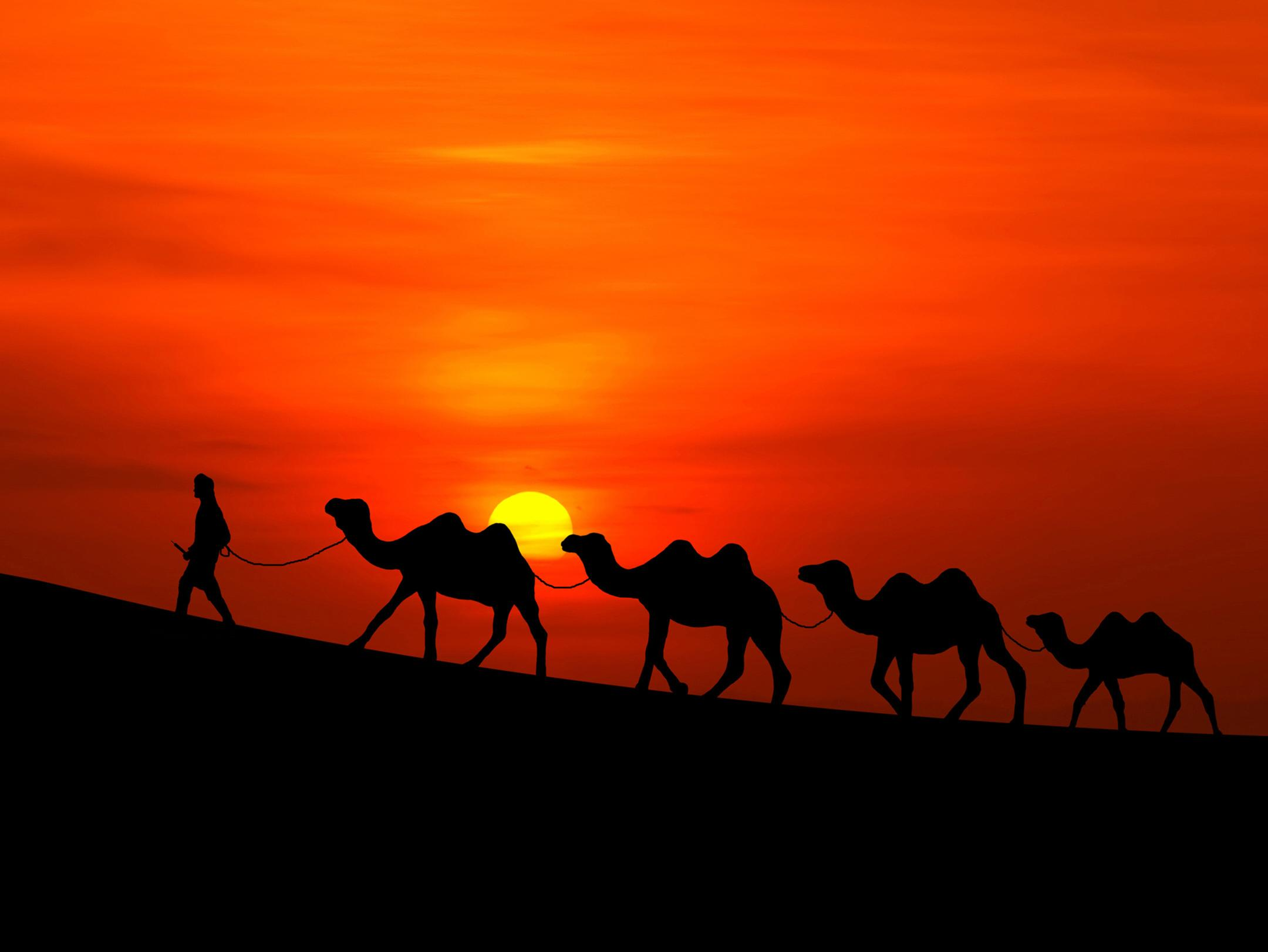 Wallpapers Sunset, Desert, Camels, HD, Nature,
