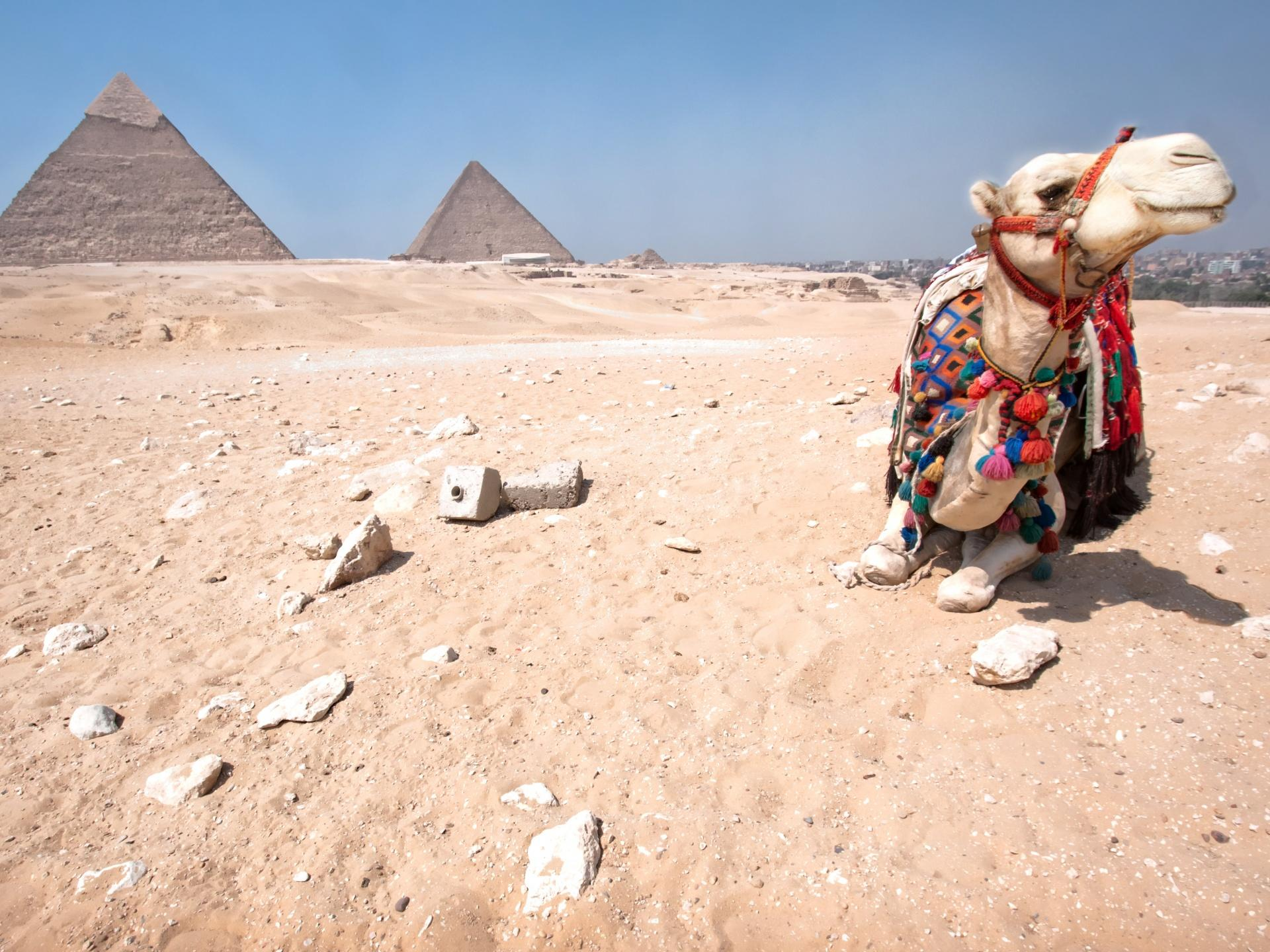Pyramids of Giza and camel Wallpapers