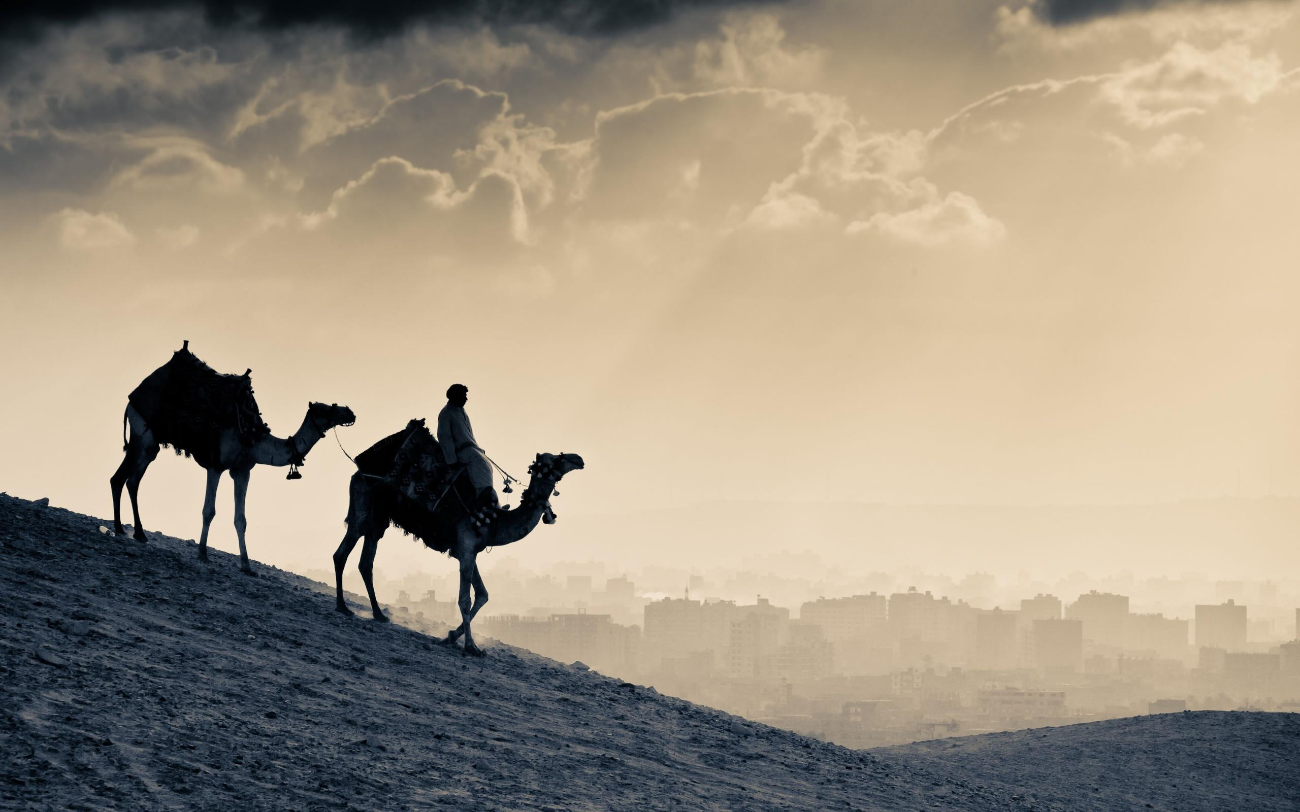 Arab People Camels, HD World, 4k Wallpapers, Image, Backgrounds