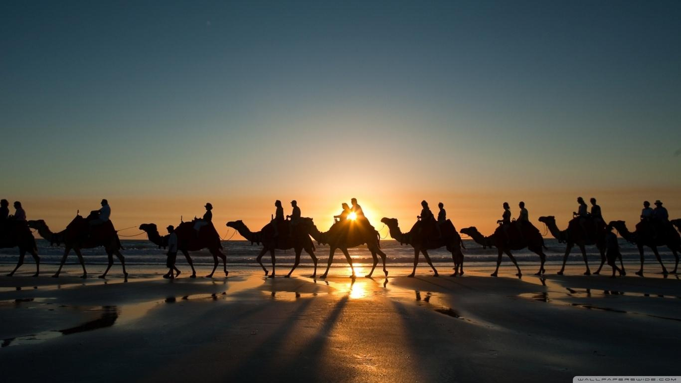 Camel Wallpapers 10