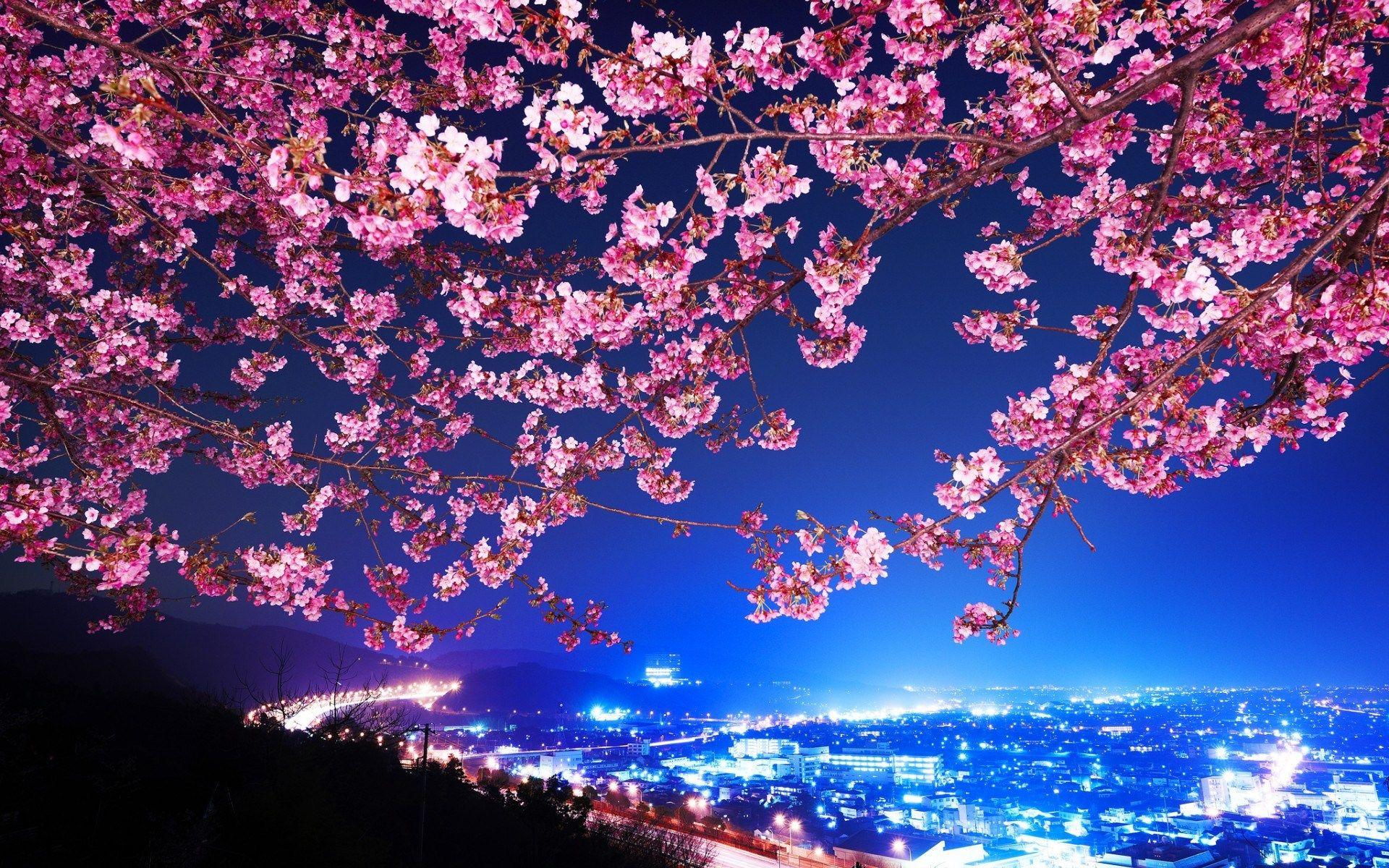 Cherry Blossom Desktop Backgrounds Wallpapers
