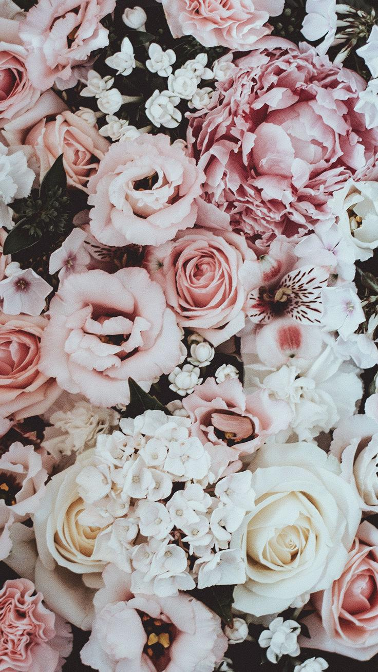 Pink Roses Aesthetic Wallpapers Wallpaper Cave Pink rose flowers wallpaper, pastel, valentine's day, flowering plant. pink roses aesthetic wallpapers