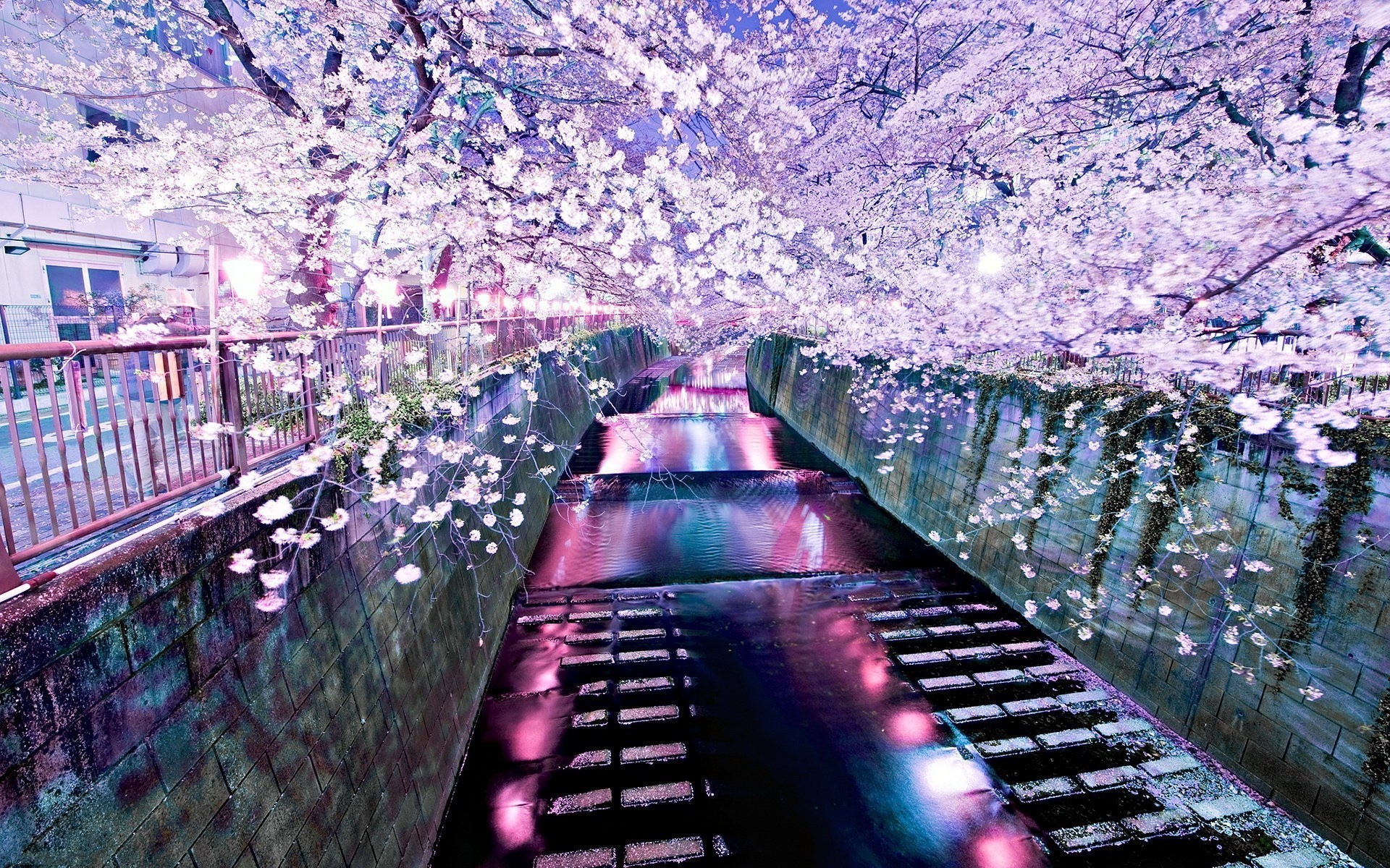 river cherry blossom wallpapers and backgrounds