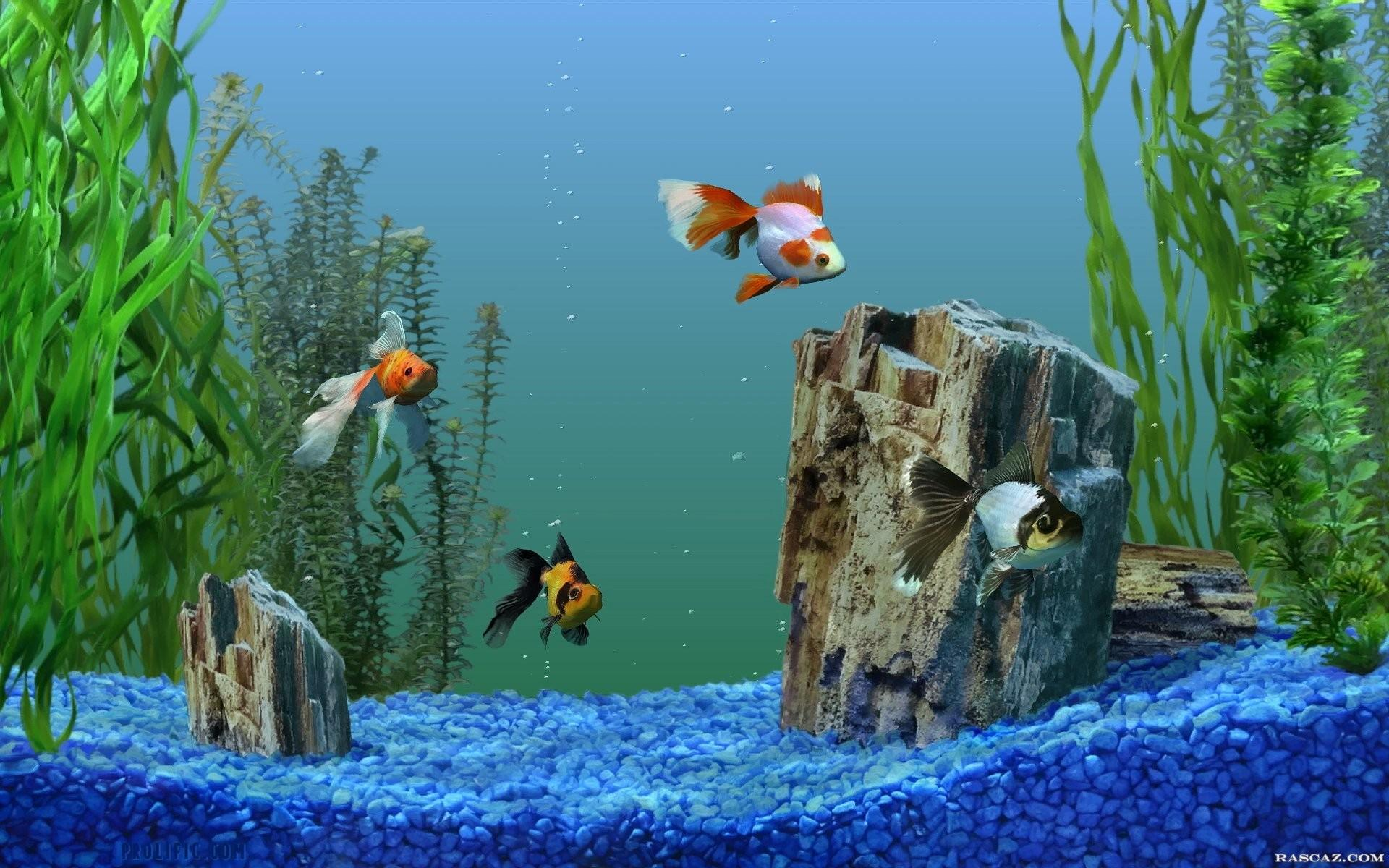 Aquarium fish pictures wallpapers