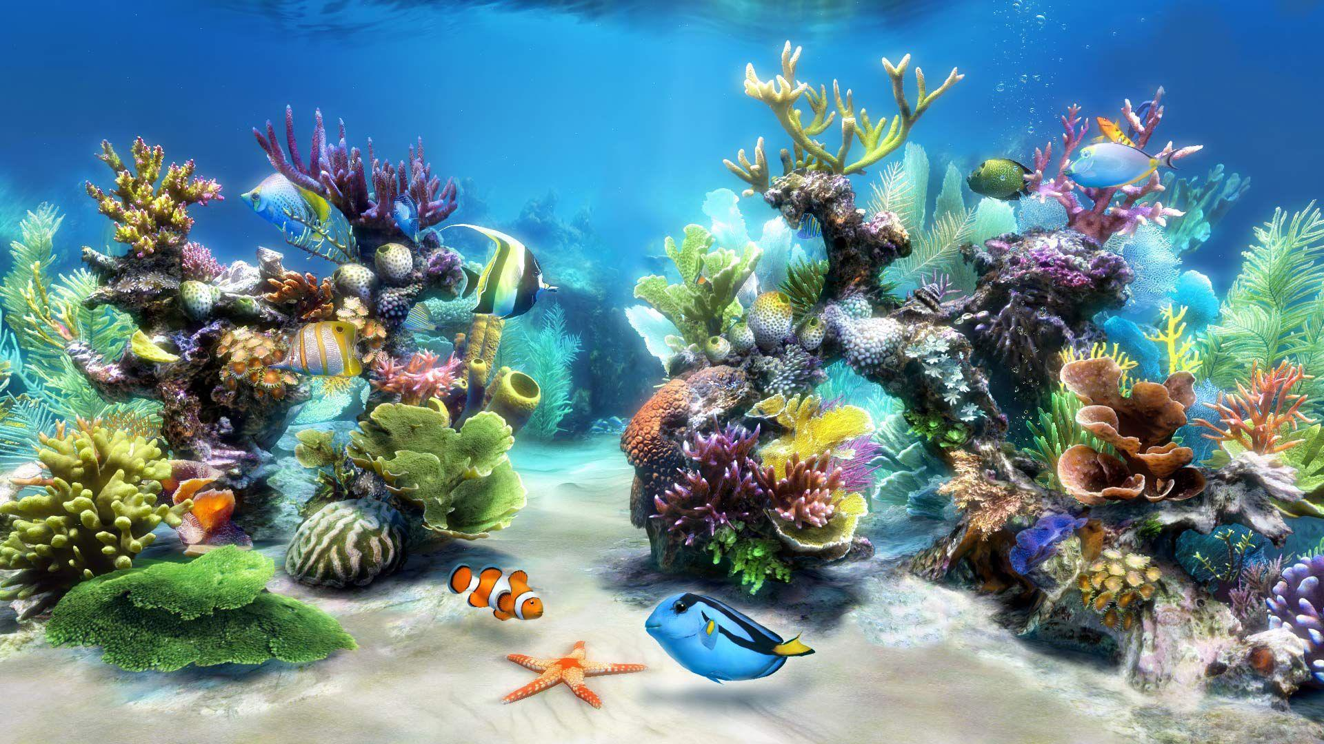 Aquarium Wallpaper Backgrounds