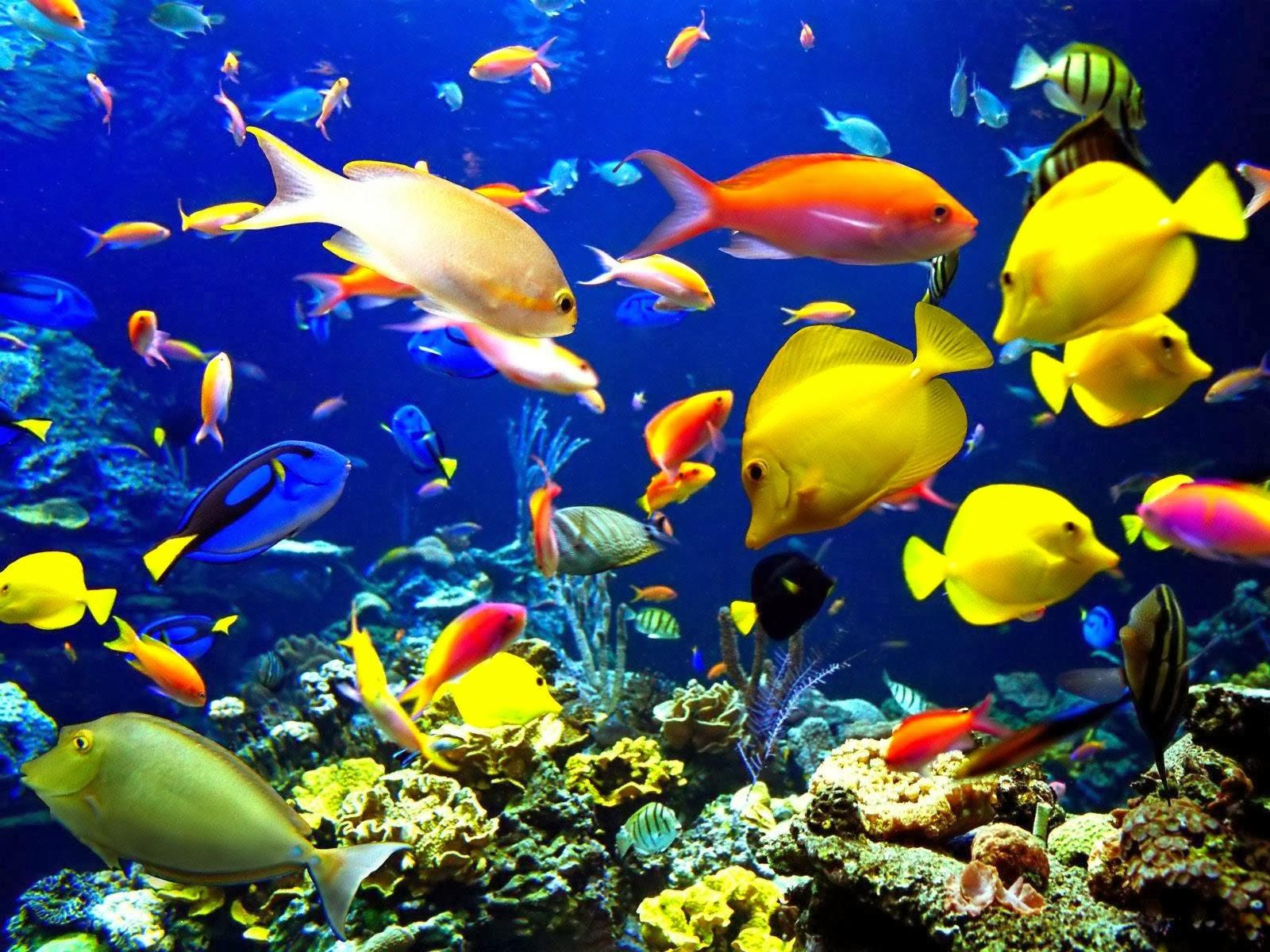 Aquarium Back Wallpapers Incredible Hd Aquarium Backgrounds