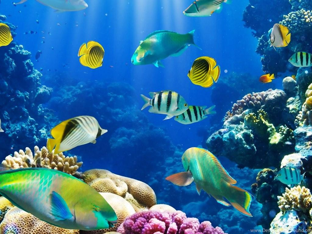 Aquarium Wallpapers HD Free Download Desktop Backgrounds
