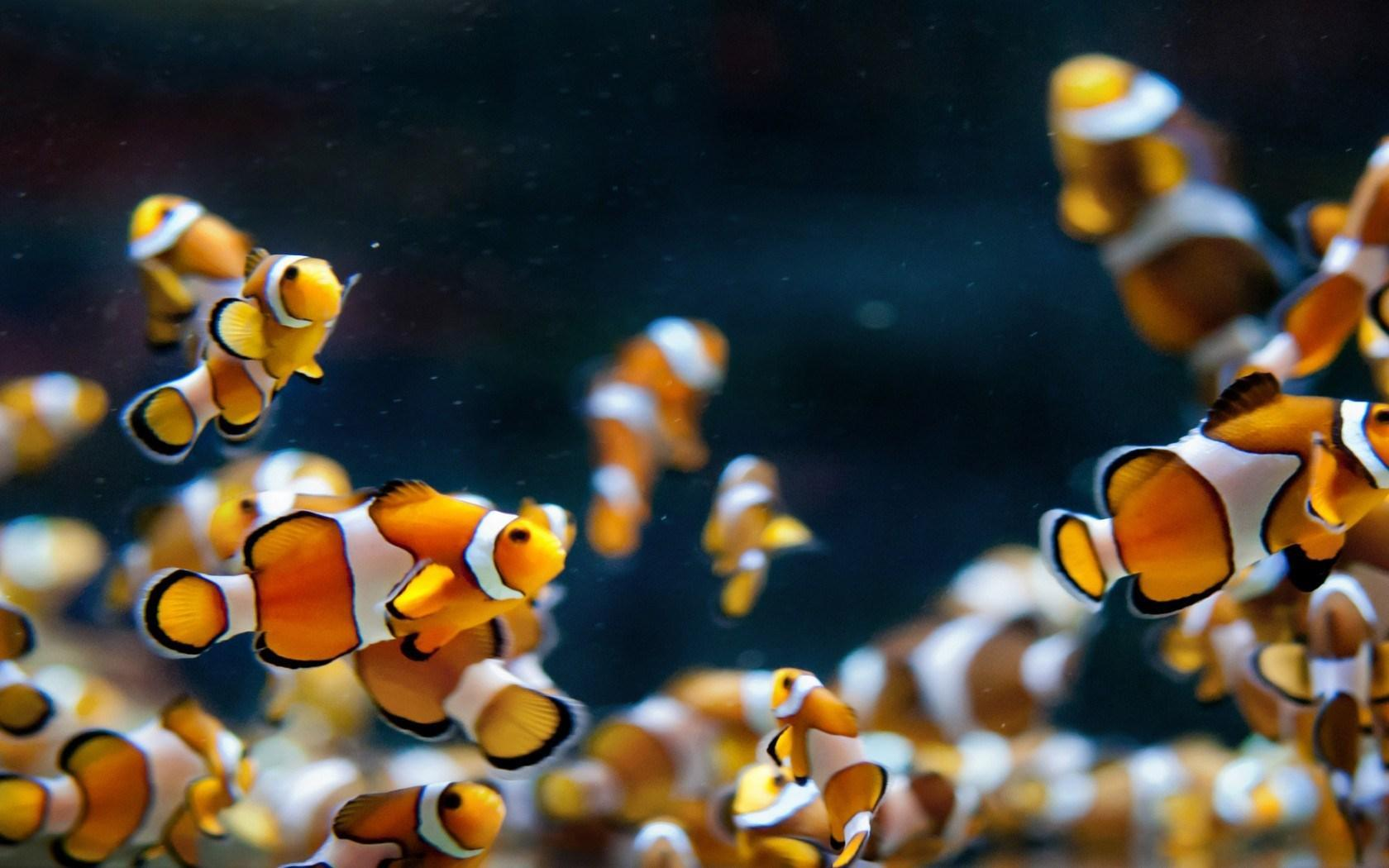 Hd Wallpapers Fish Aquarium Dowload