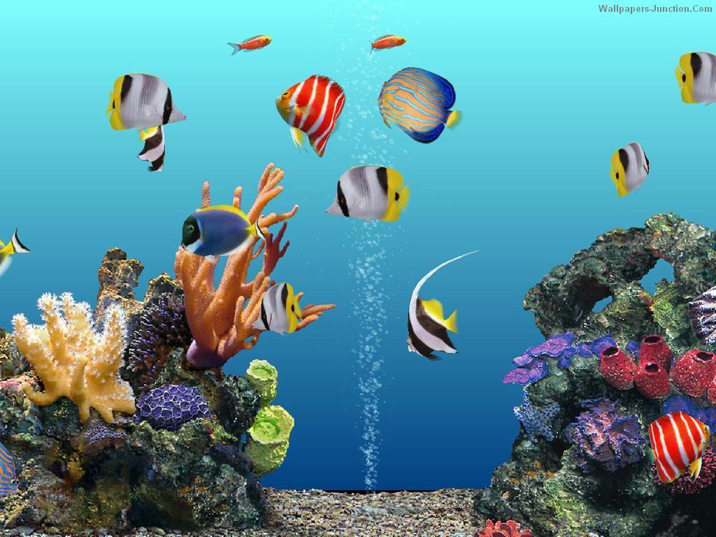 Download Free Aquarium Wallpapers