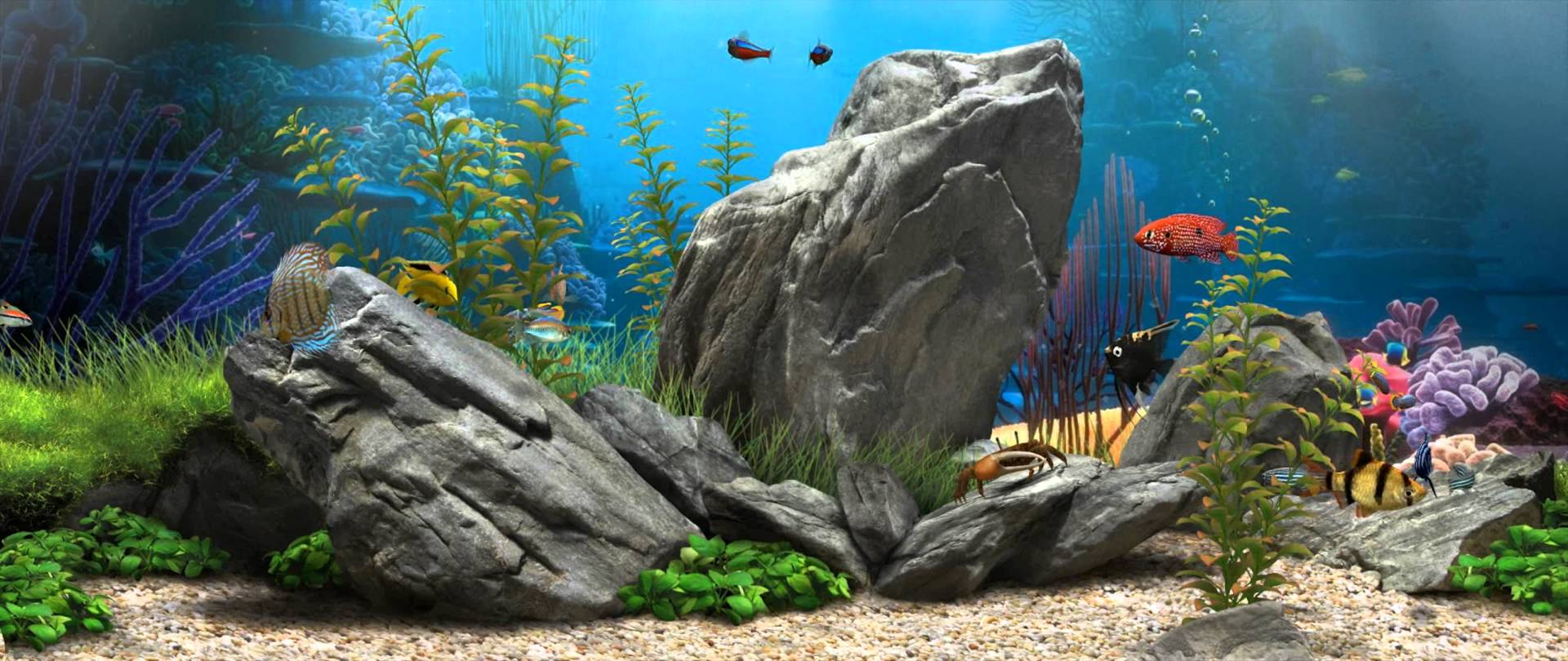 55+ Fish Tank Wallpapers