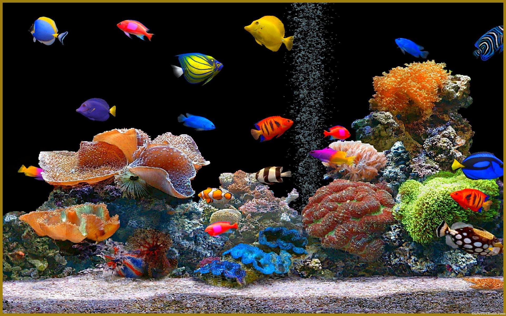 Aquarium Backgrounds, Wallpapers, Image, Pictures Design Trends